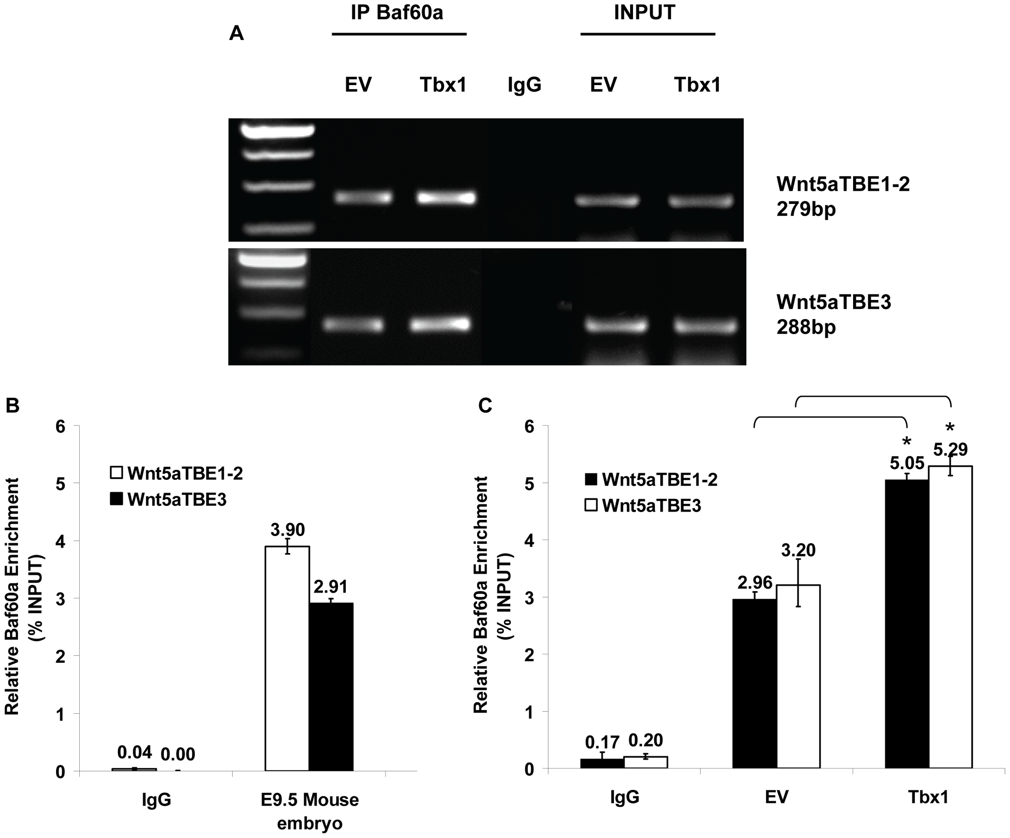 Baf60a occupies TBE regions of Wnt5a in P19Cl6 cells and embryo tissues.