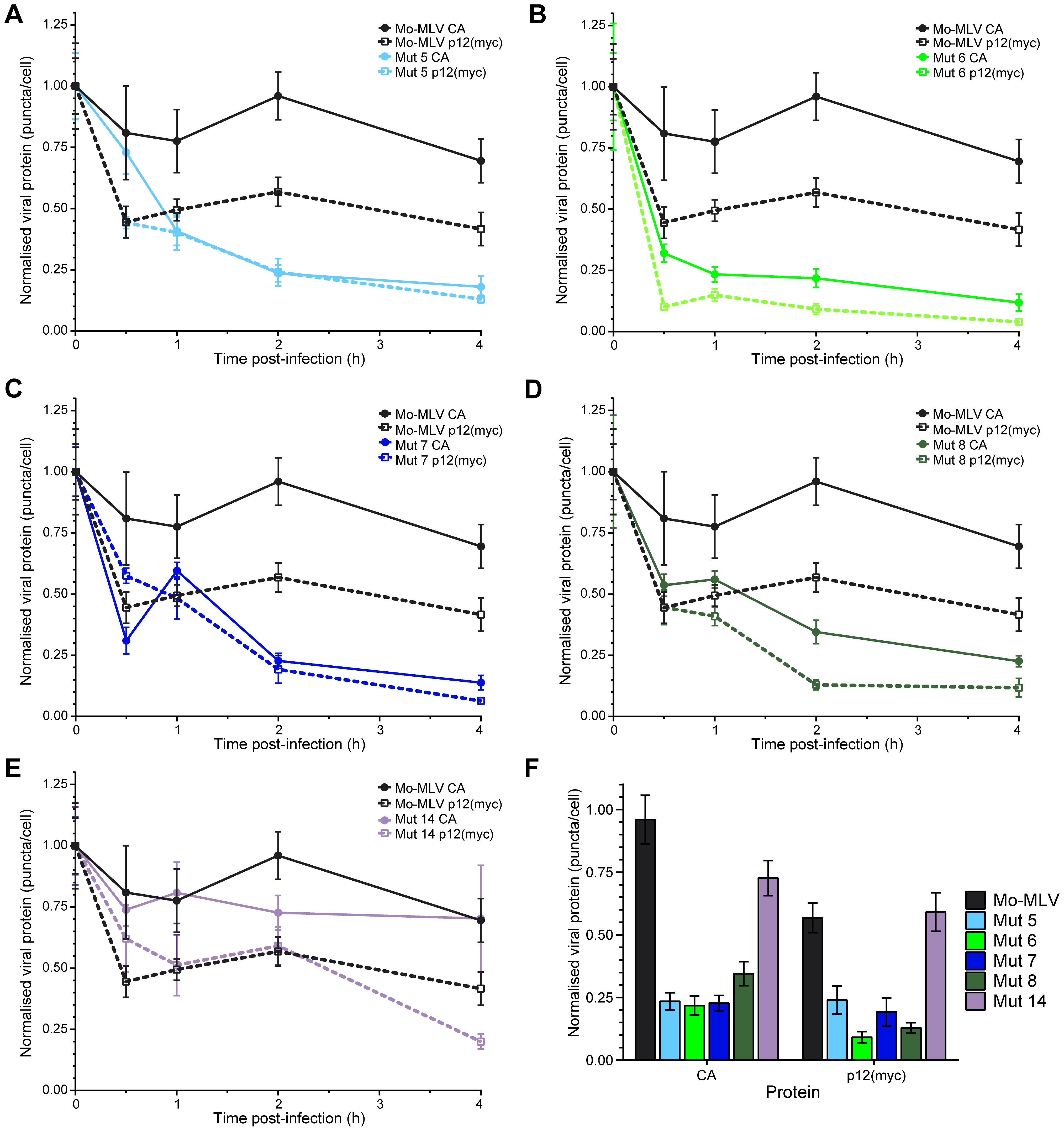 Kinetics of p12 and CA loss from cells infected with Mo-MLV.