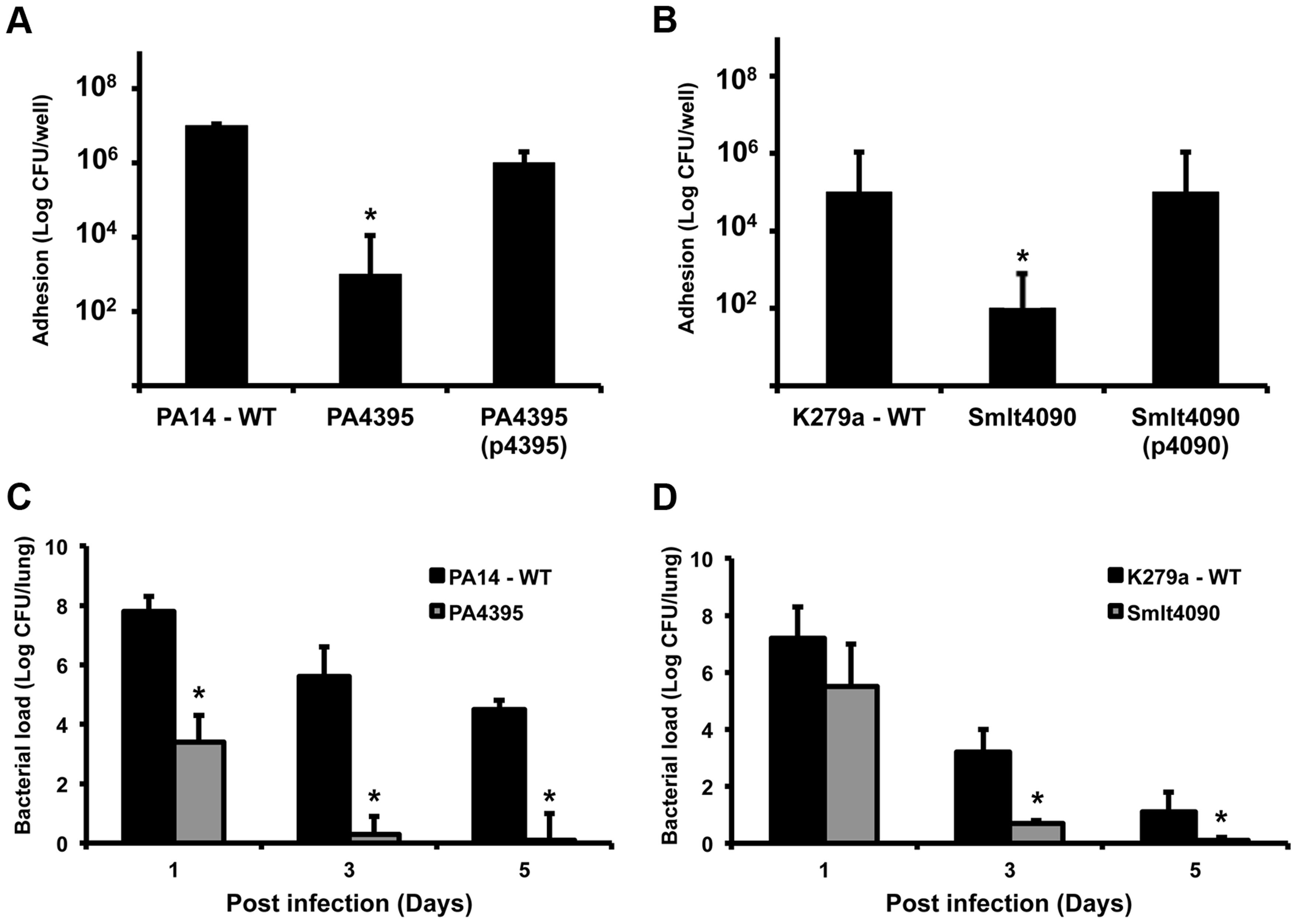 Roles for XC_3703 homologues in virulence of the human pathogens <i>Pseudomonas aeruginosa</i> and <i>Stenotrophomonas maltophilia</i>.