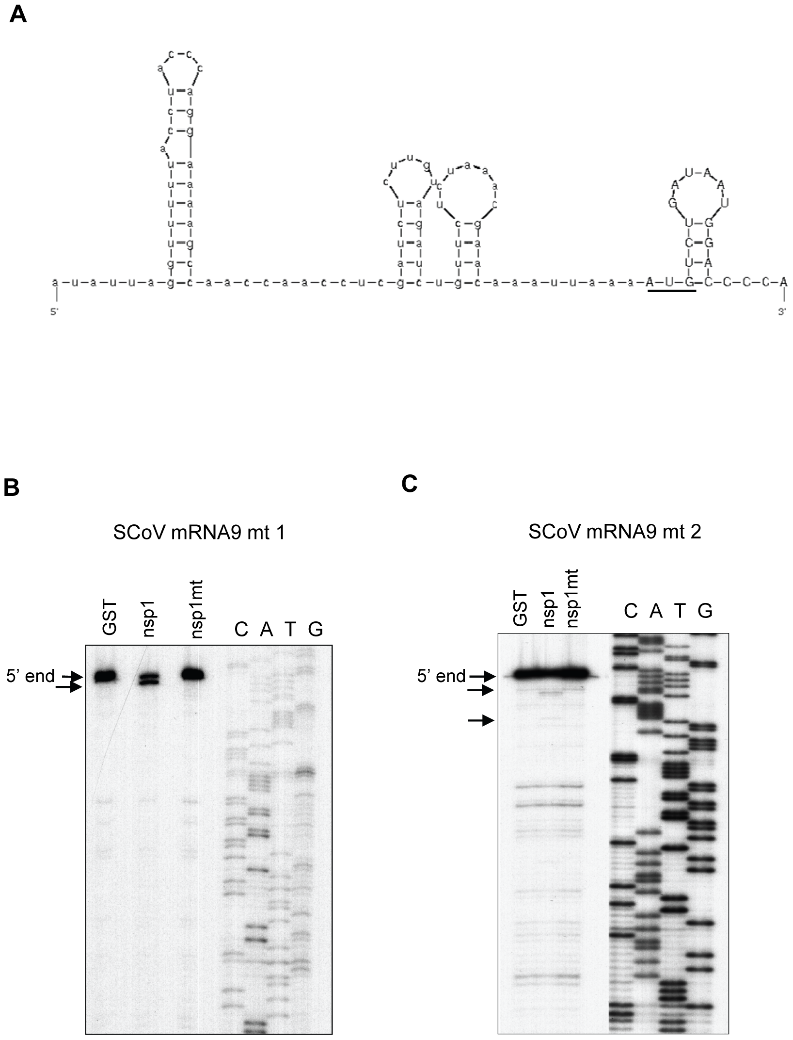 Susceptibilities of SCoV mRNA 9 mutants to nsp1-induced RNA modification.