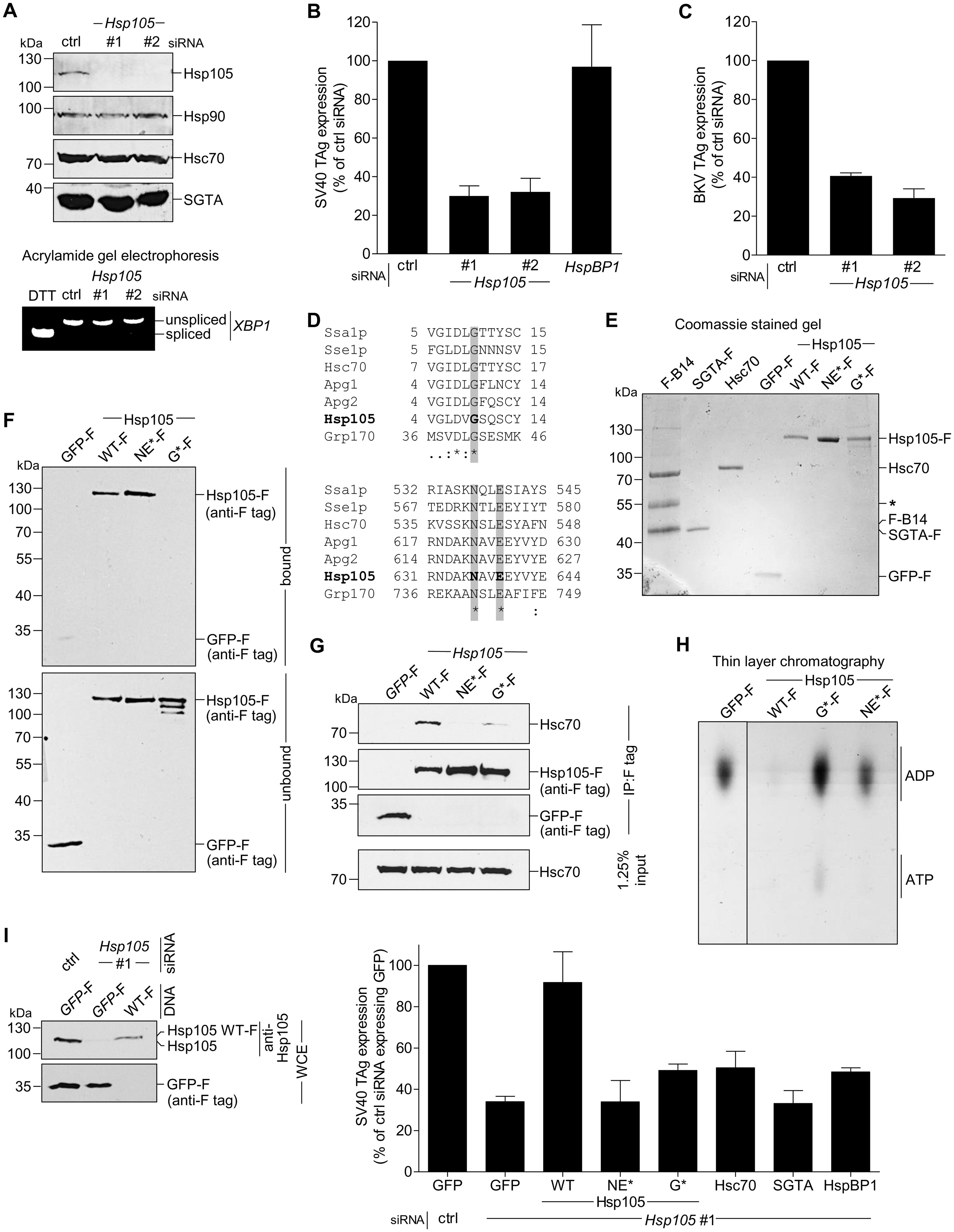 Hsp105 is essential for polyomavirus infection.