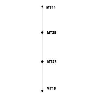 Diagram eBURST, MLVA analýza kmenů <i>B. pertussis,</i> ČR, 1990–2007 Figure 3. eBURST diagram, MLVA analysis of <i>B. pertussis</i> strain collection, Czech Republic, 1990–2007