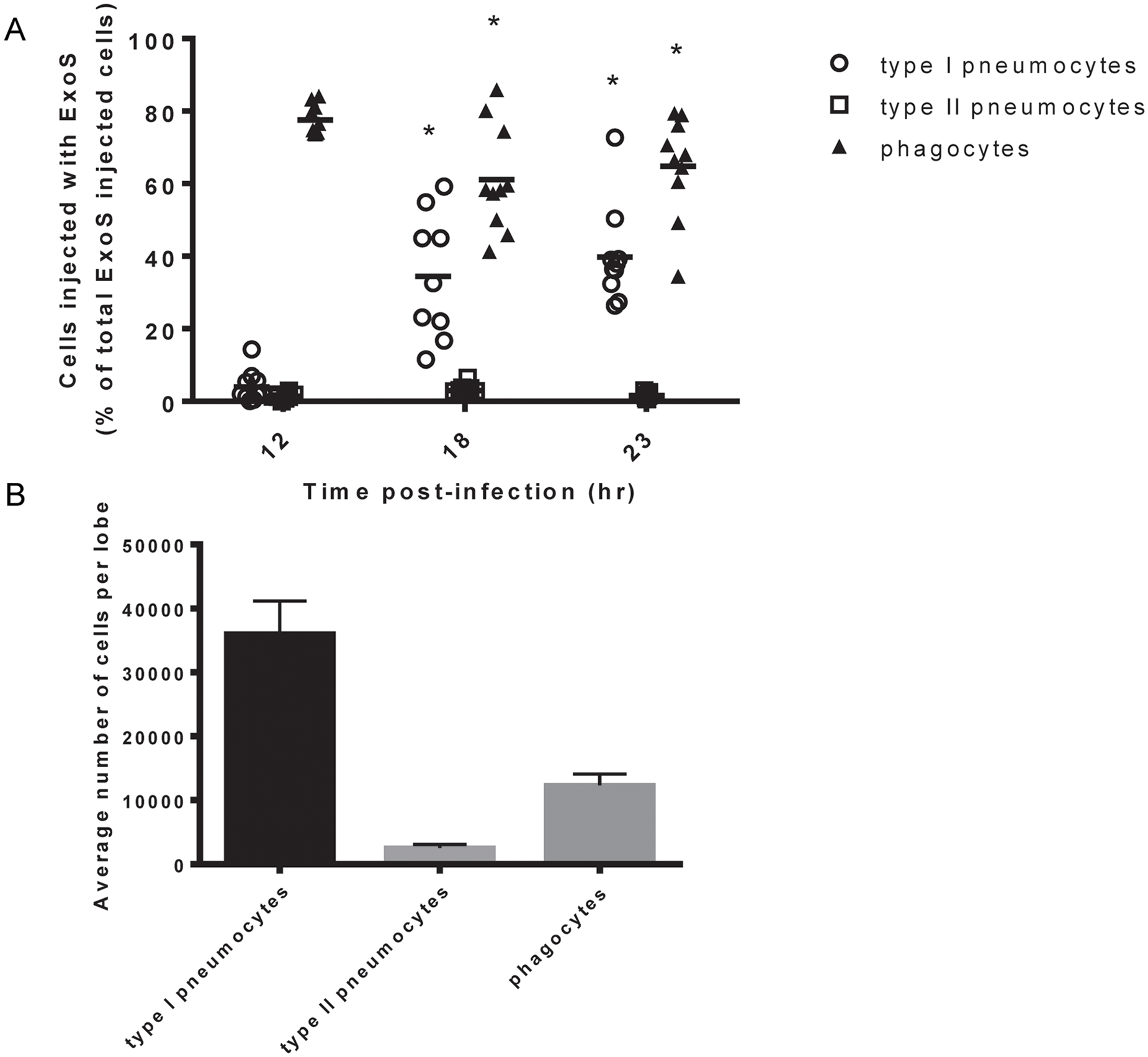 Type I pneumocytes comprise an increasing proportion of injected cells over time during pneumonia.