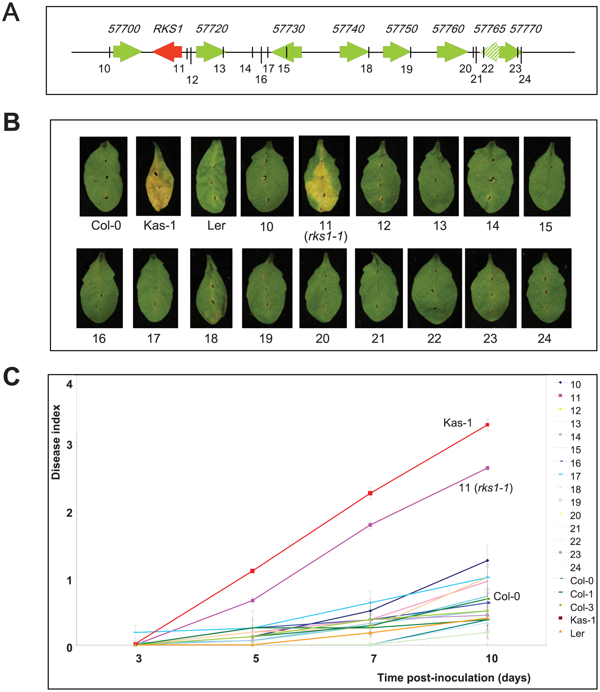 Phenotypic analysis of insertional mutants corresponding to genes of the <i>QRX3</i> locus.