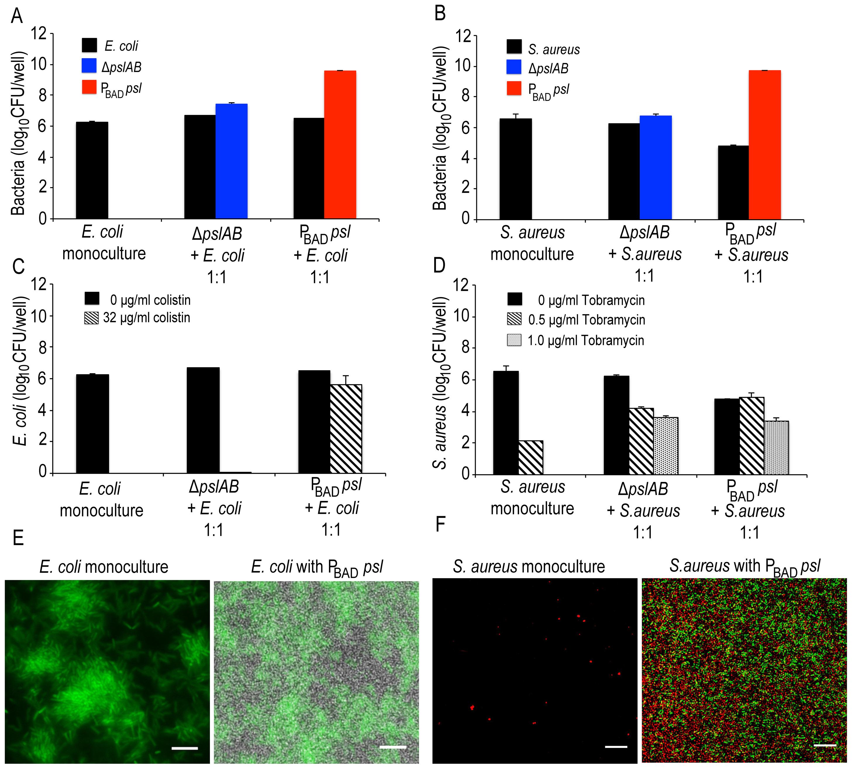 Psl provides a protective advantage for <i>E.</i> <i>coli</i> and <i>S. aureus</i>.