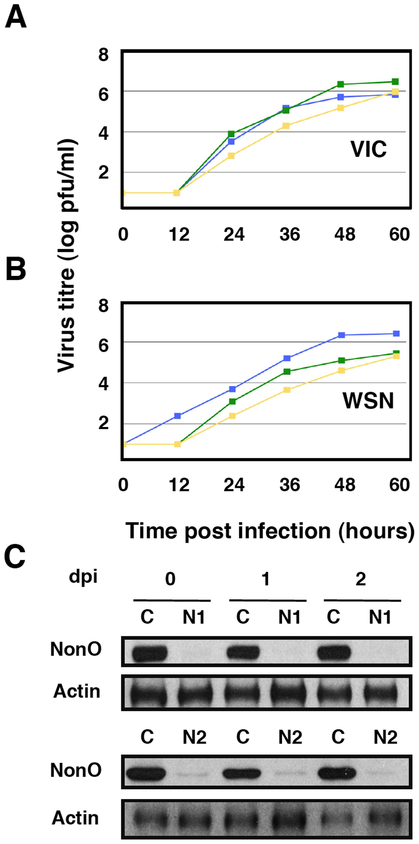Kinetics of influenza virus multiplication in NonO-silenced cells.