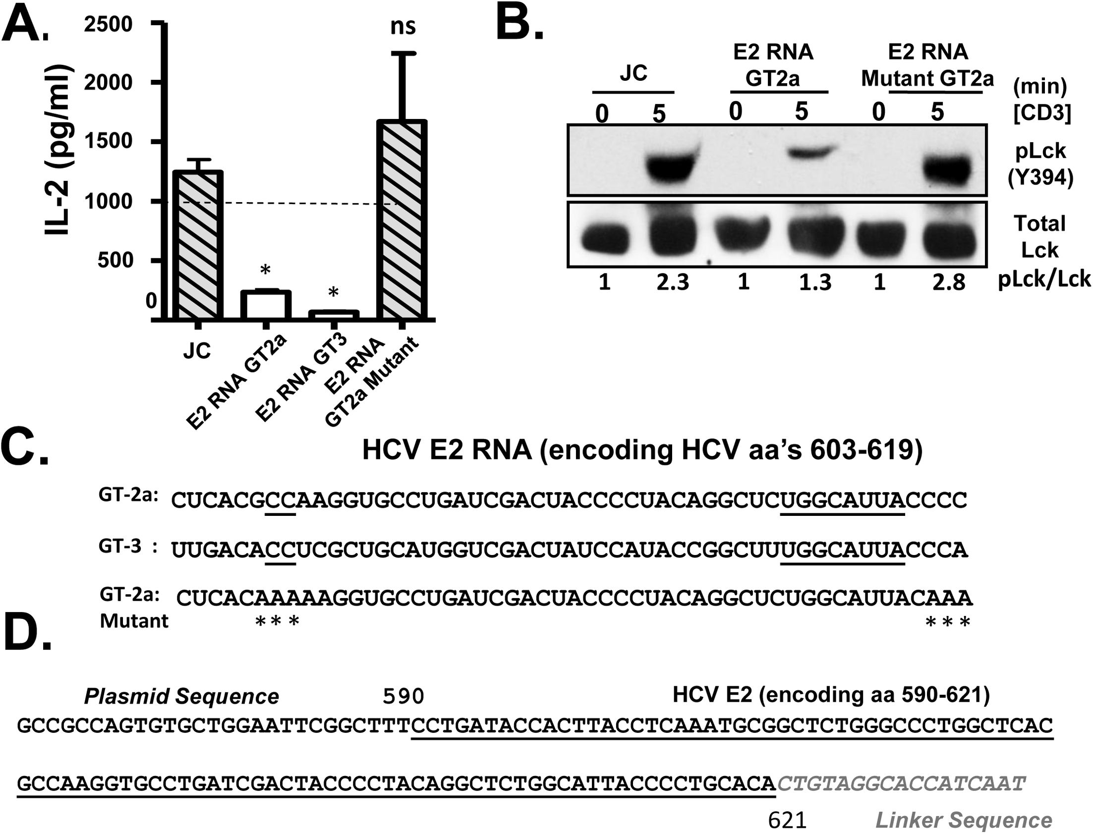 HCV envelope (E2) coding RNA is sufficient to inhibit proximal T cell receptor (TCR) signaling.