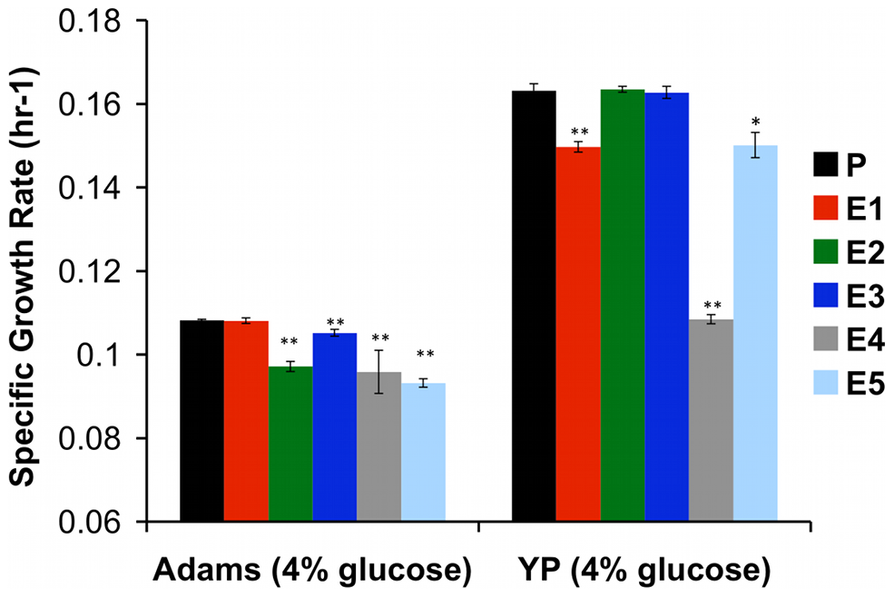 Specific Growth Rate of Evolved Clones Is Decreased in Glucose-Rich Environment.