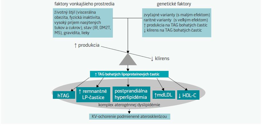 Schéma 1. Centrálna úloha na triacylglyceroly bohatých častíc v komplexe aterogénnej dyslipidémie [27]