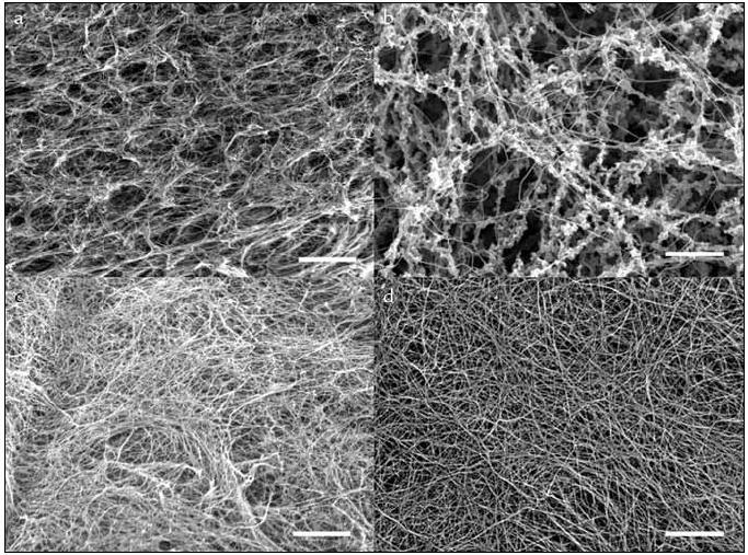 Fotografie z elektronového mikroskopu. Fibrinové sítě z modifikovaného: a) MDA, b) NaOCl, c) SIN-1 a kontrolního fibrinogenu (d). Měřítko je 5 μm.