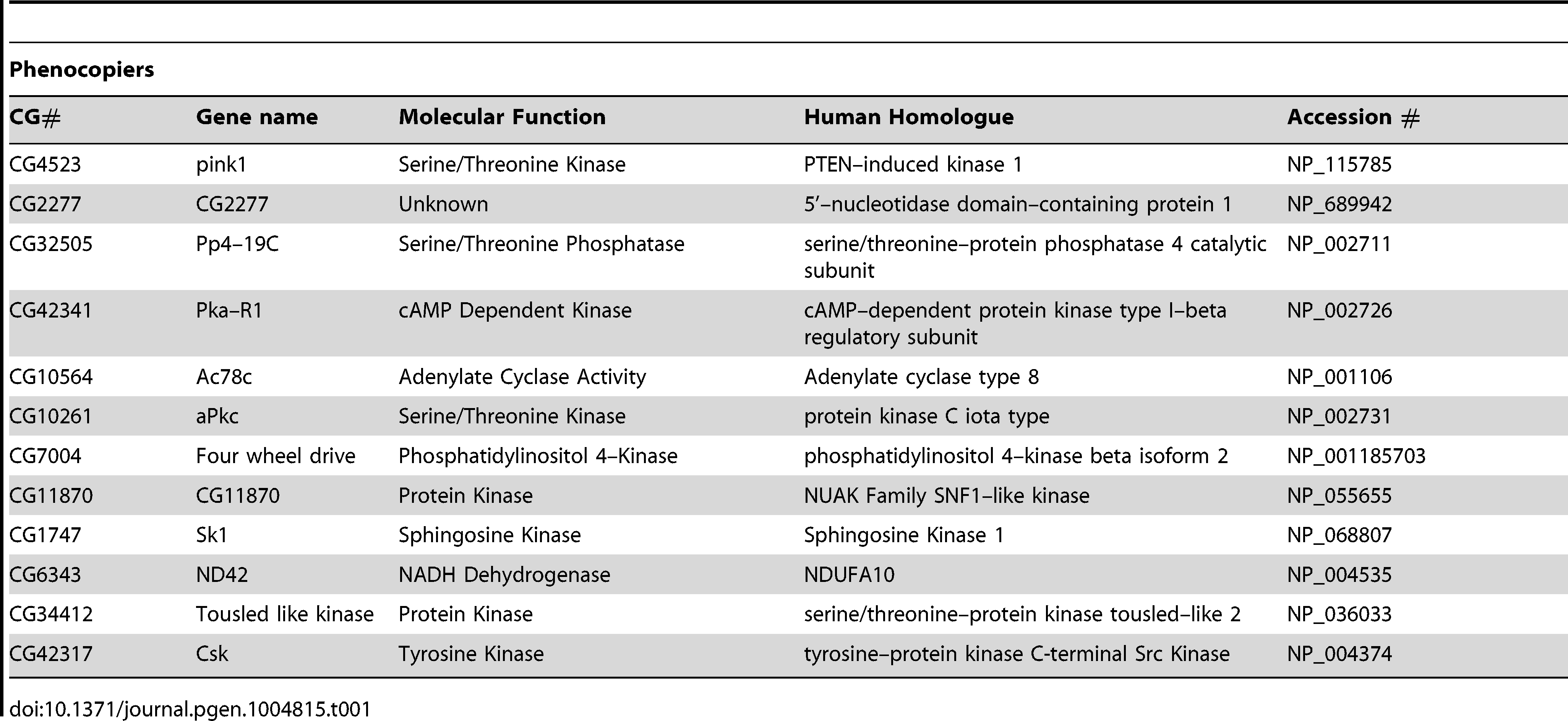 List of genes that phenocopy <i>pink1</i> dsRNA induced mitochondrial fusion.