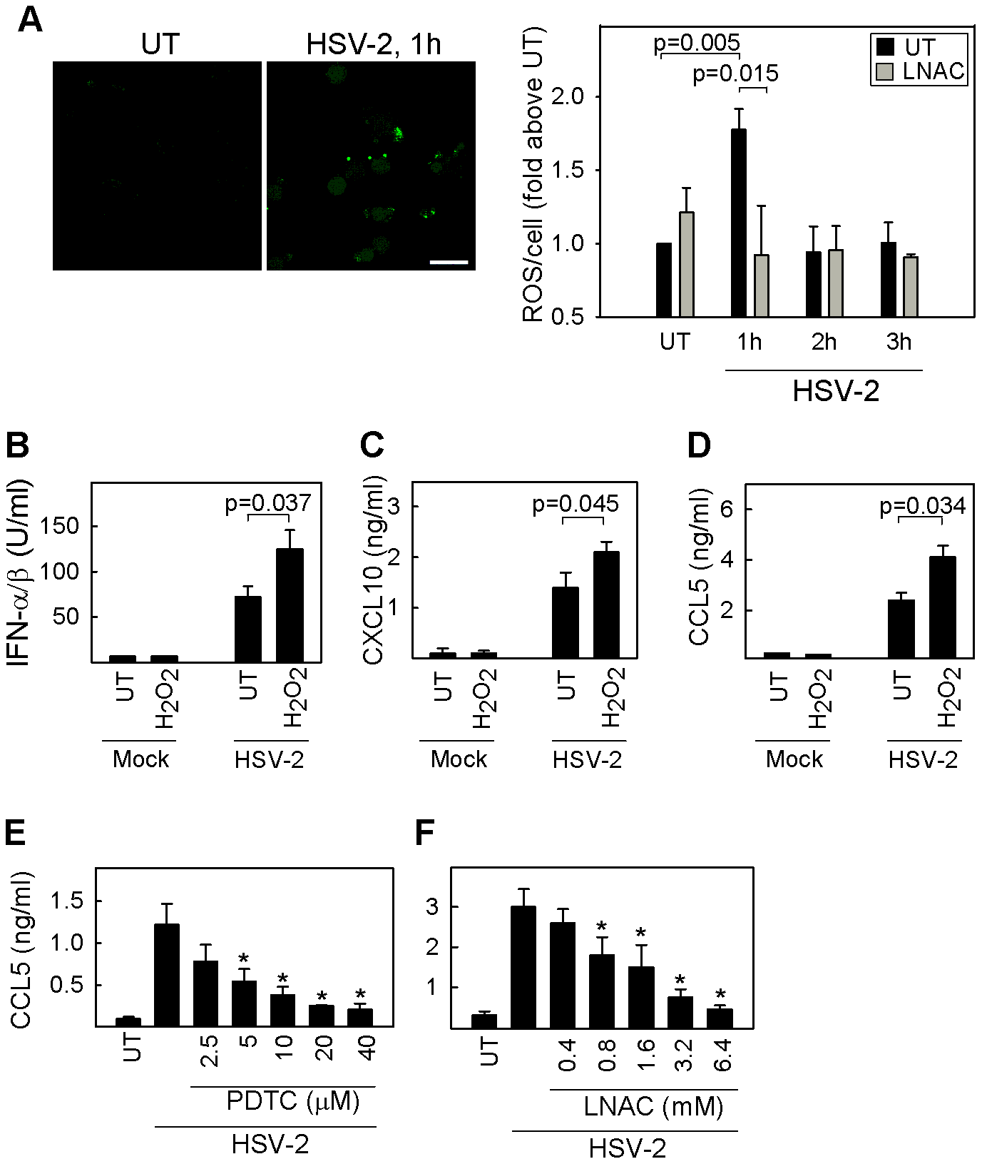 Intracellular ROS produced following HSV infection is essential for cytokine expression.