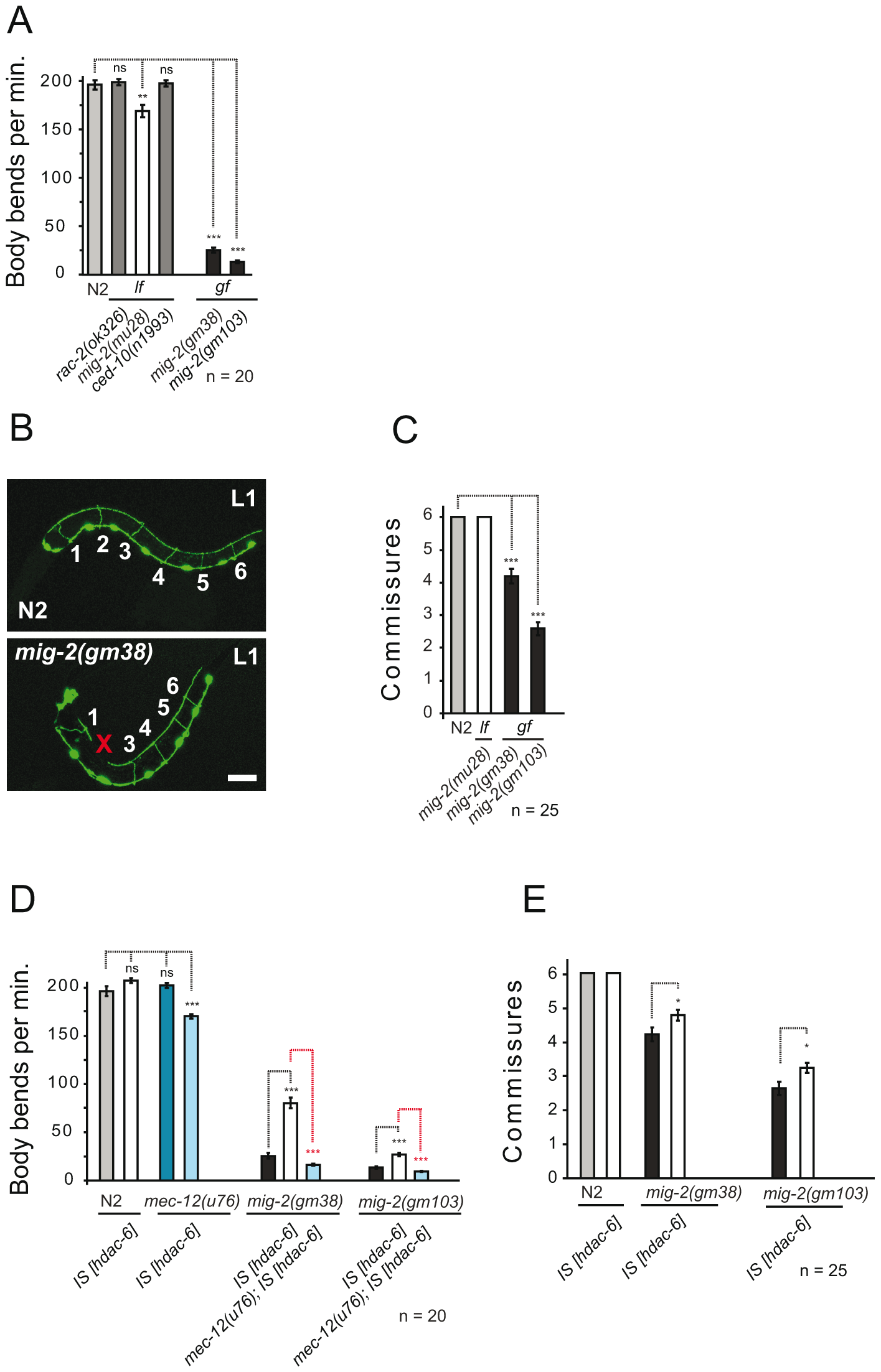 Phenotypes of <i>mig-2(gf)</i> are suppressed by overexpression of HDAC-6.