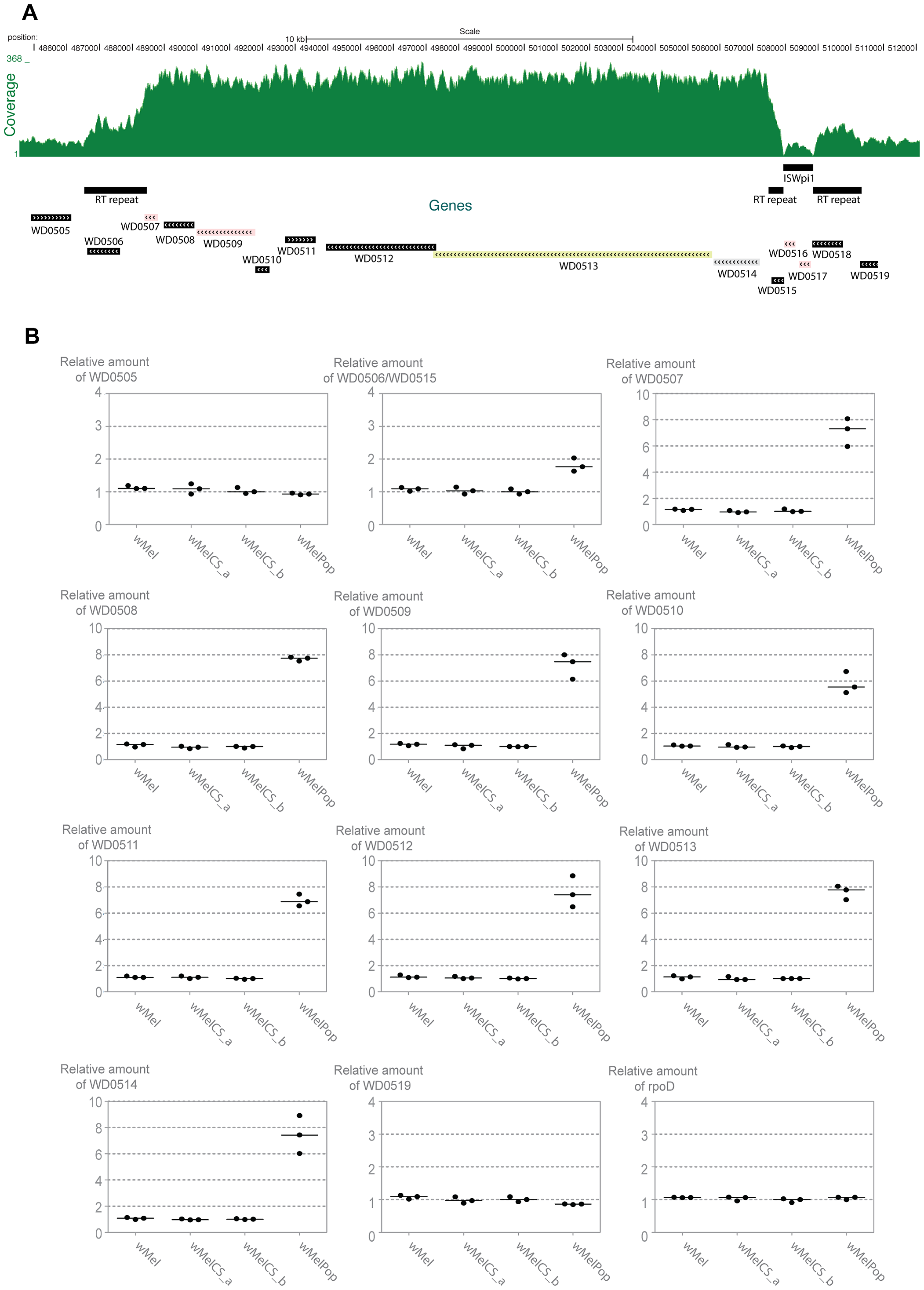 Genomic region amplified in wMelPop.
