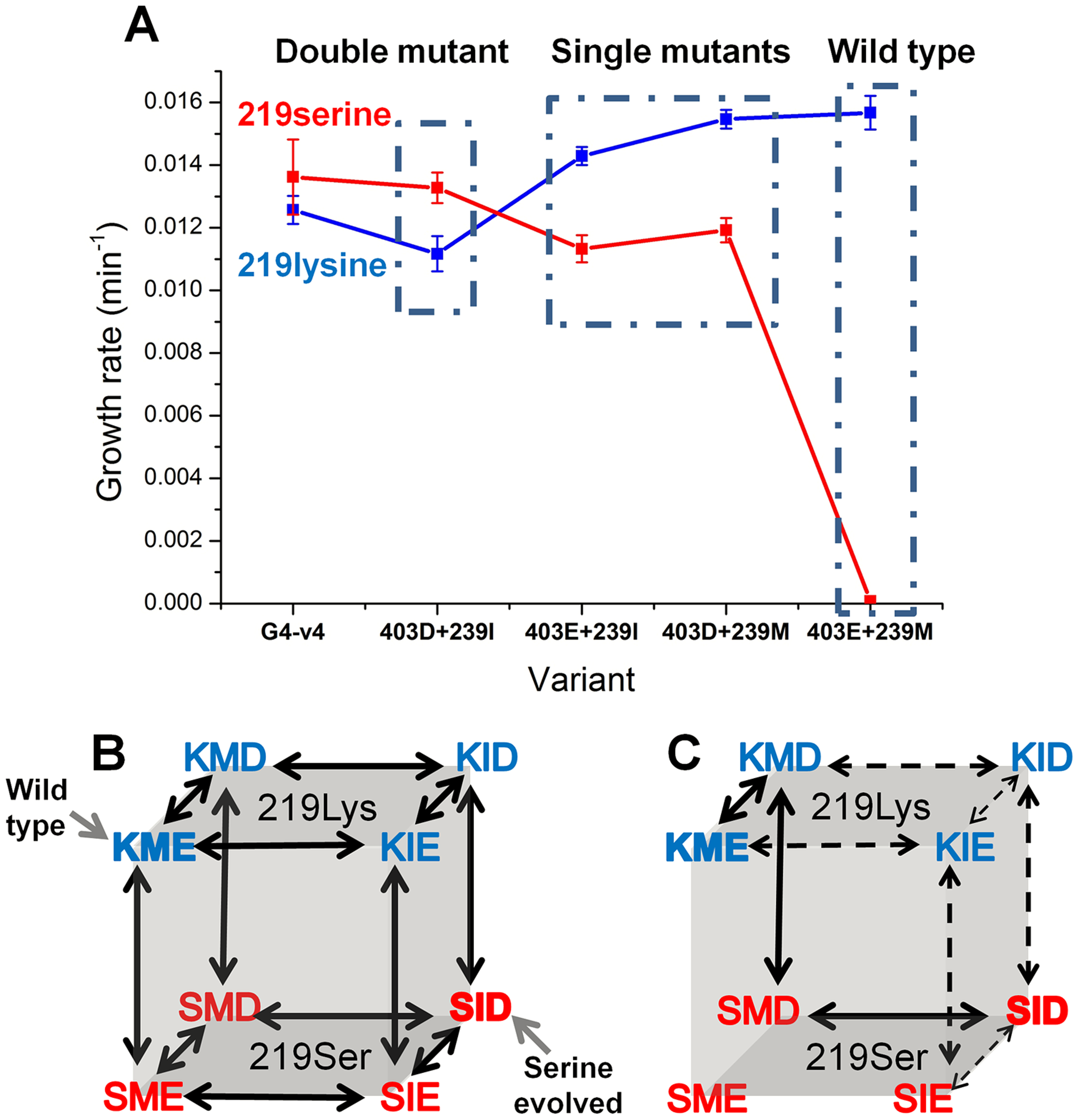 Epistatic effects of mutations underline divergence and incompatibility at position 219.