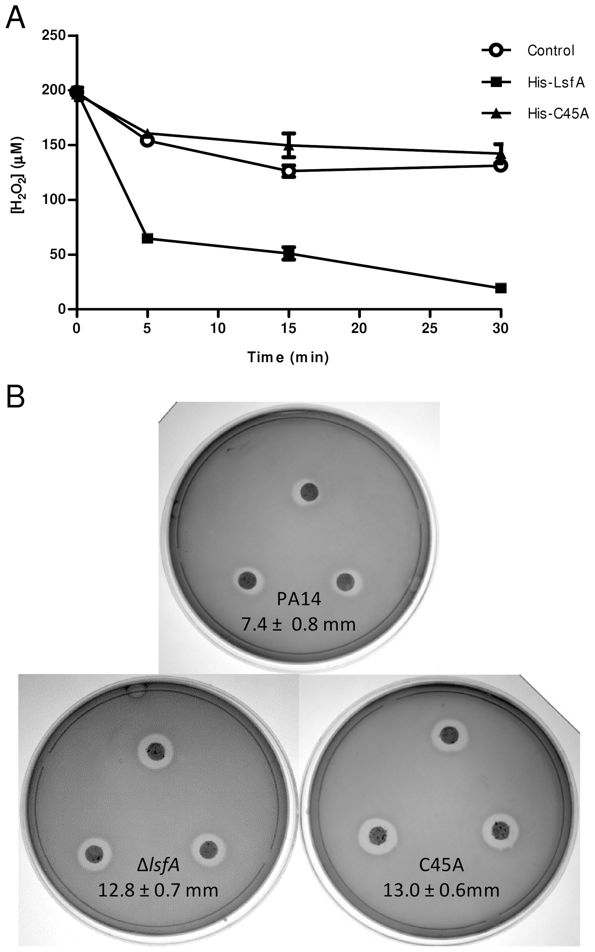 LsfA confers PA14 resistance to hydrogen peroxide and reduces it <i>in vitro</i>.