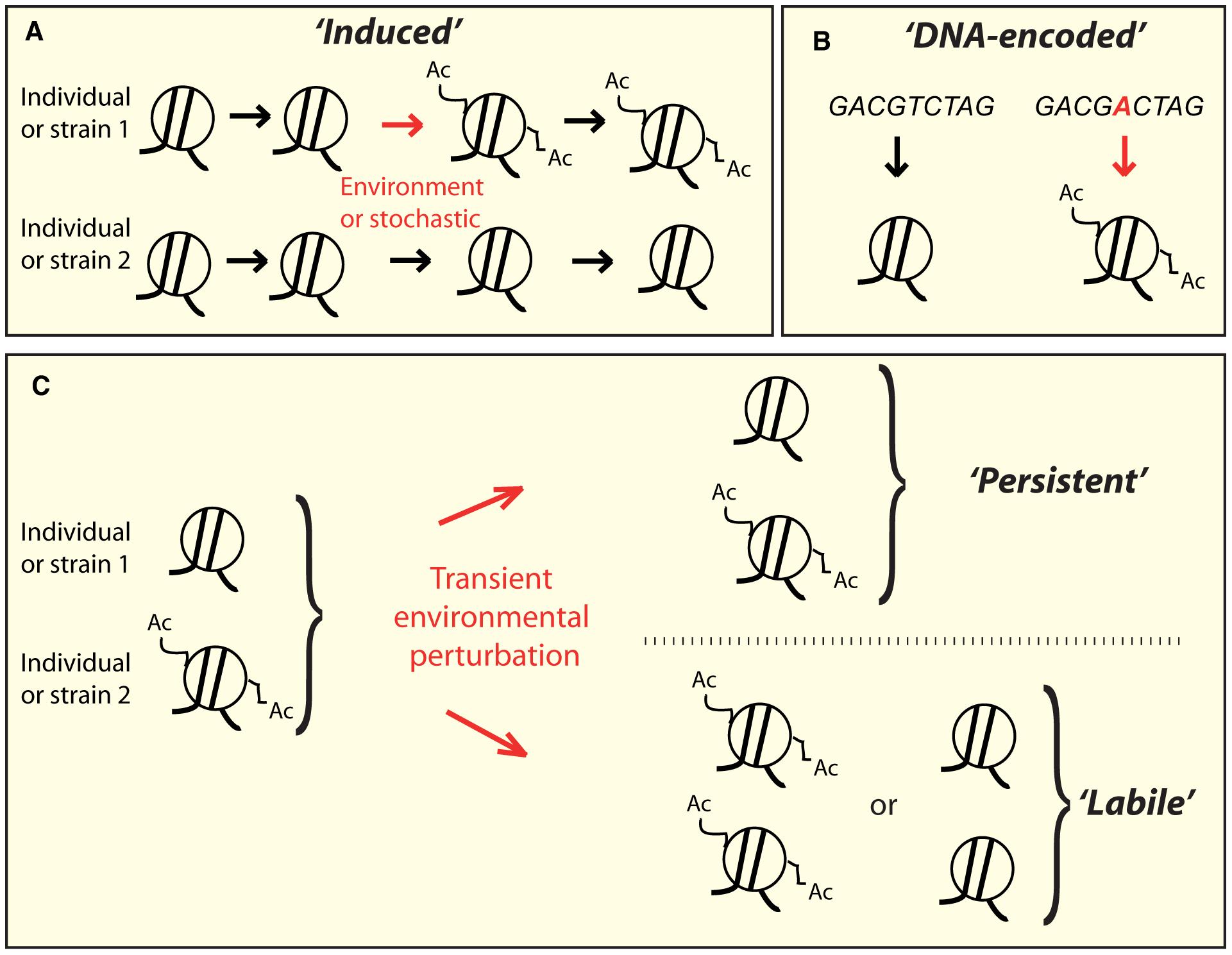 Conceptually distinct classes of epi-polymorphisms.