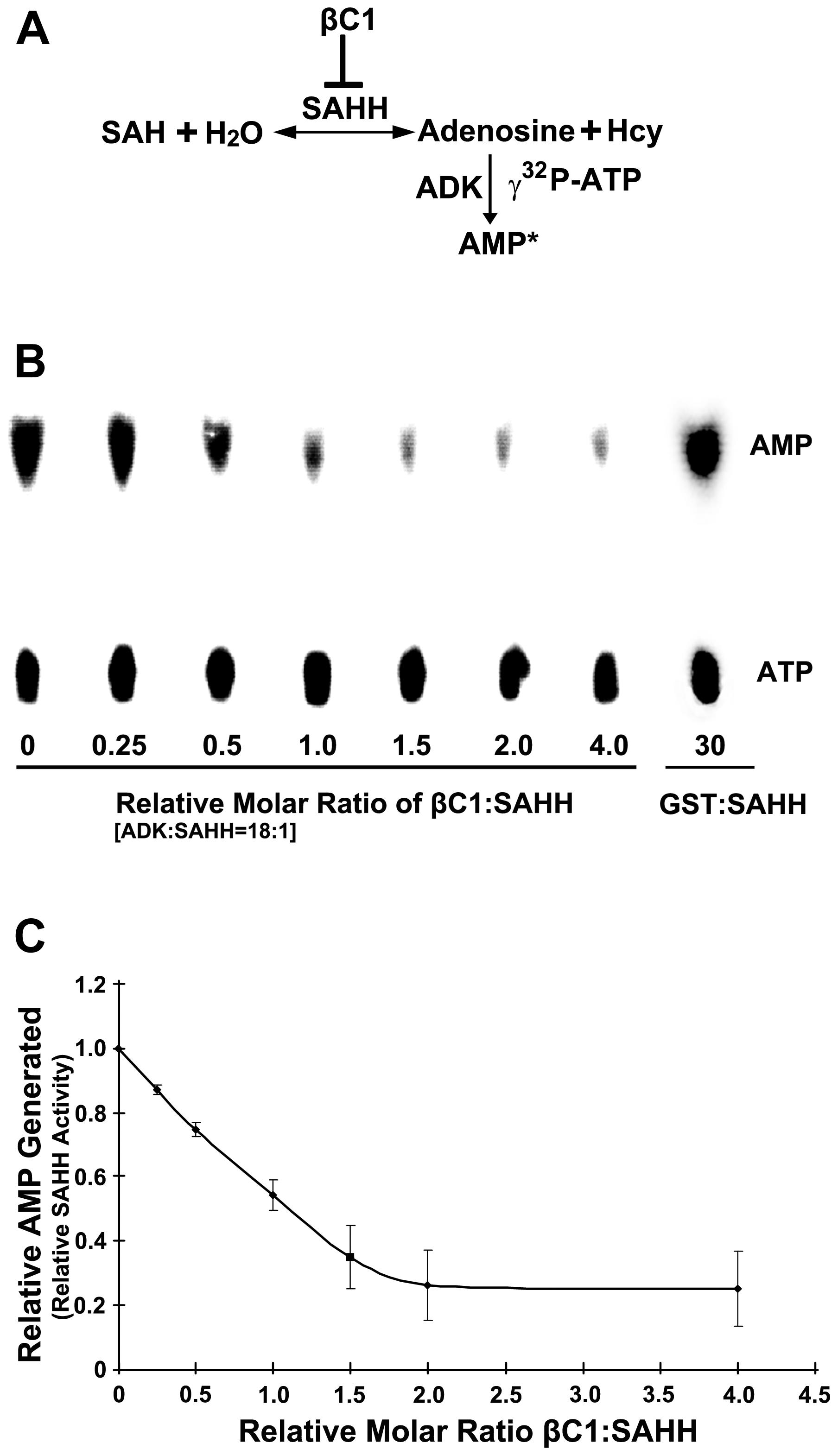 βC1 inhibits SAHH activity <i>in vitro</i>.