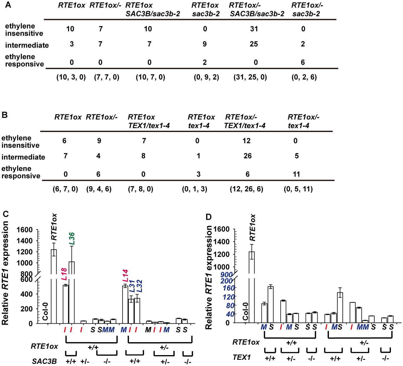 Analyses for the ethylene response phenotype and <i>RTE1</i> expression in <i>35S:RTE1</i>-containing individuals.