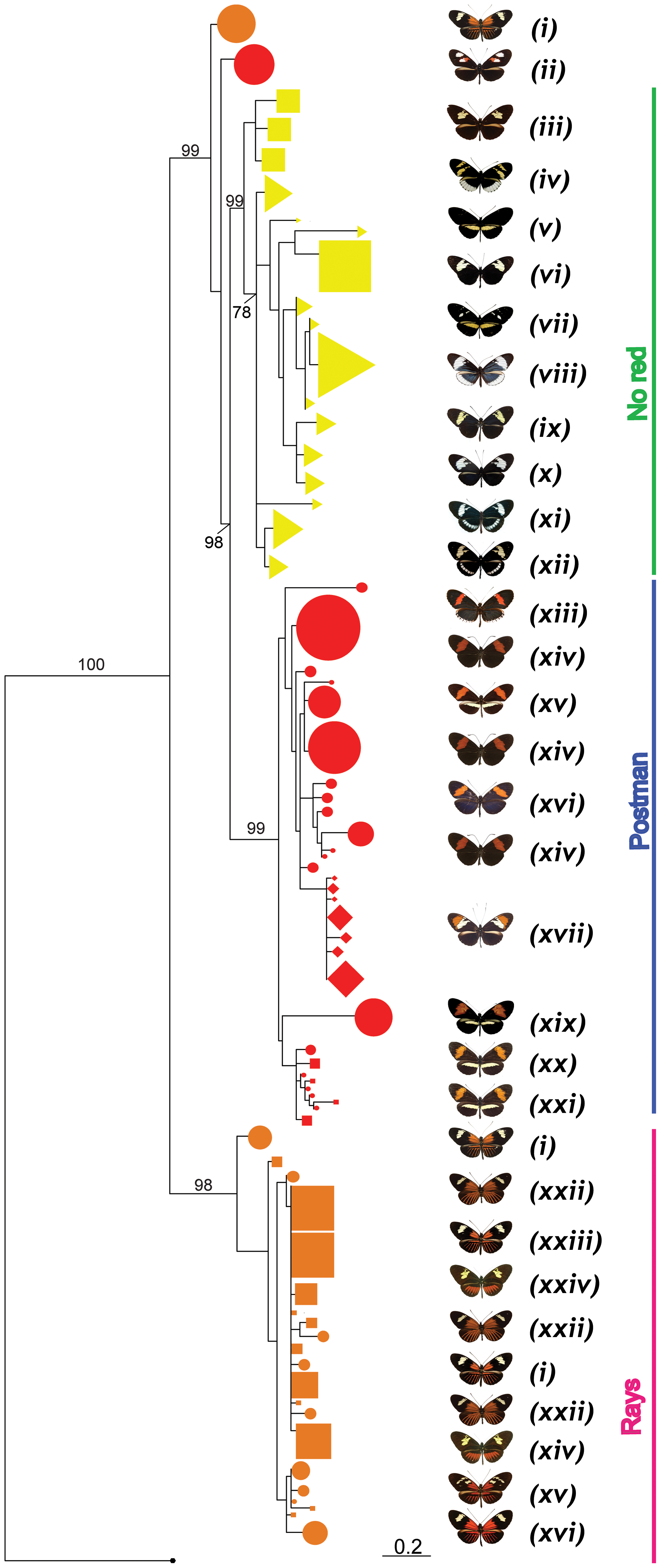 Phylogenetic clustering at HmB453k inferred by Maximum Likelihood.