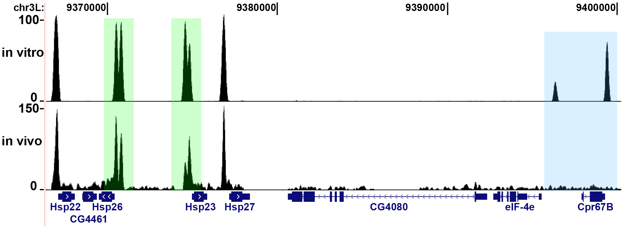 In vitro binding reveals potential HSF binding sites.