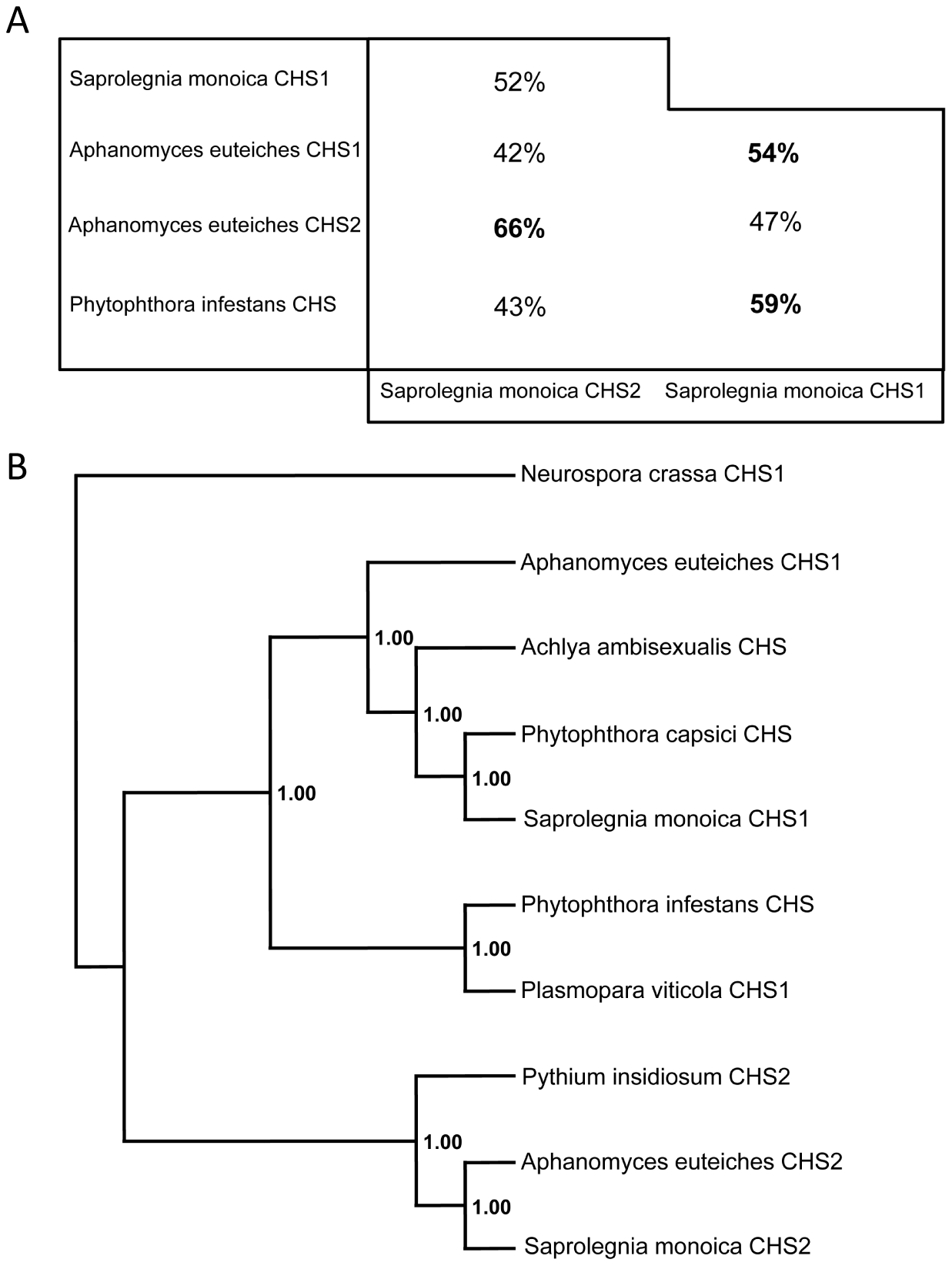 Sequence identities and phylogenetic analysis of oomycete CHS proteins.