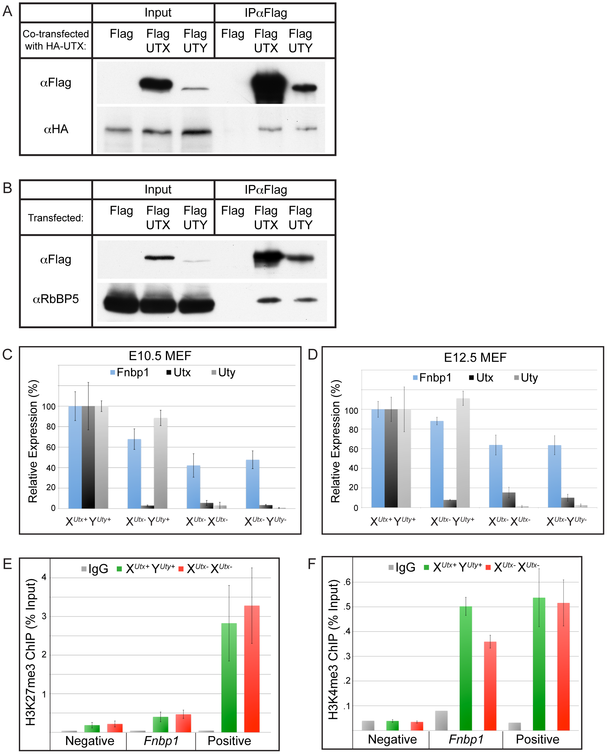 UTX and UTY associate in common protein complexes and are capable of H3K27 demethylase independent gene regulation.