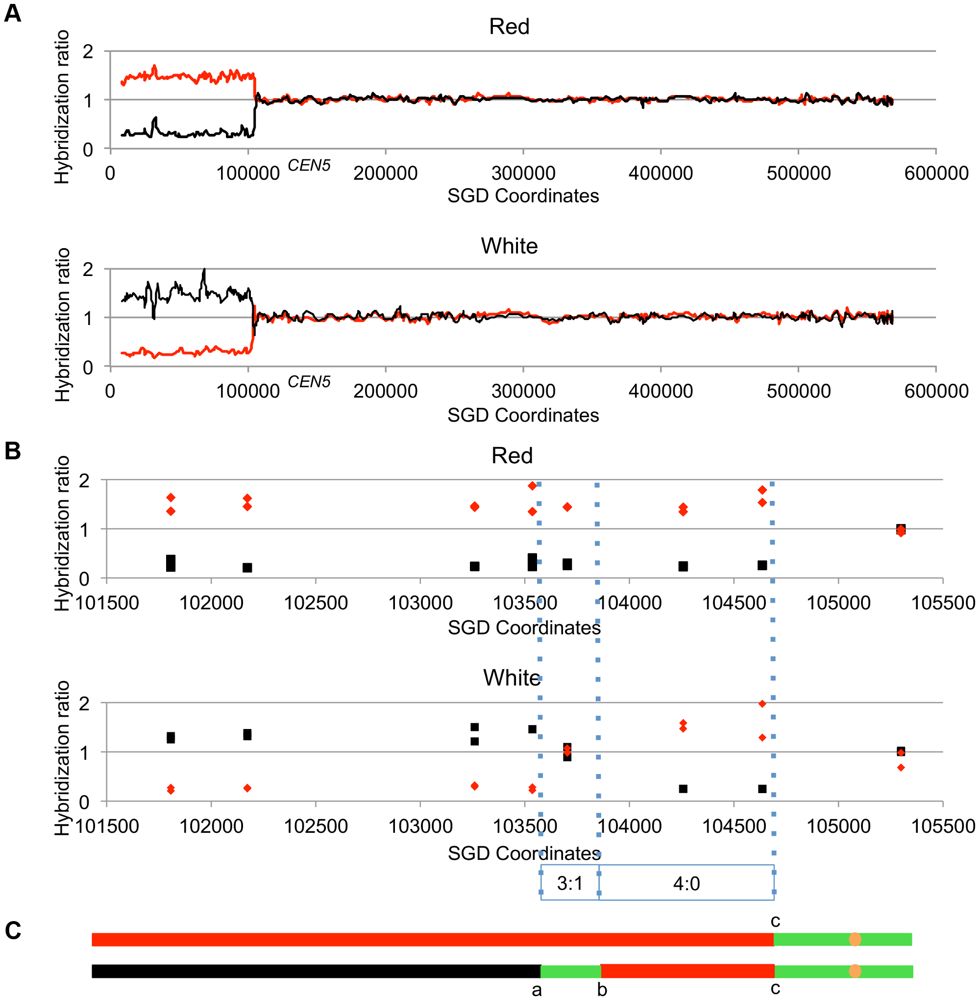 Mapping crossovers on chromosome V by SNP arrays.