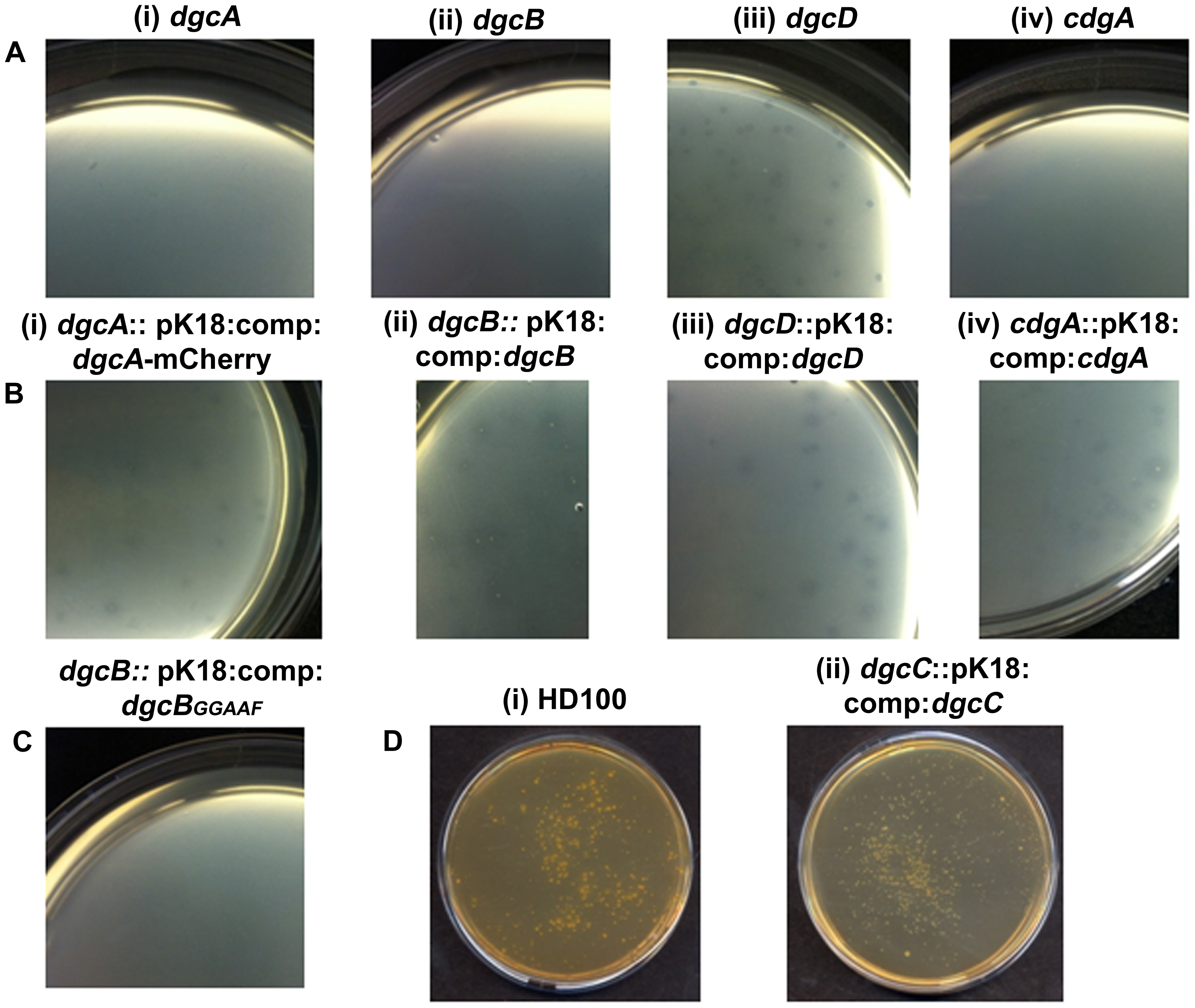 Predatory and axenic growth on agar plates.