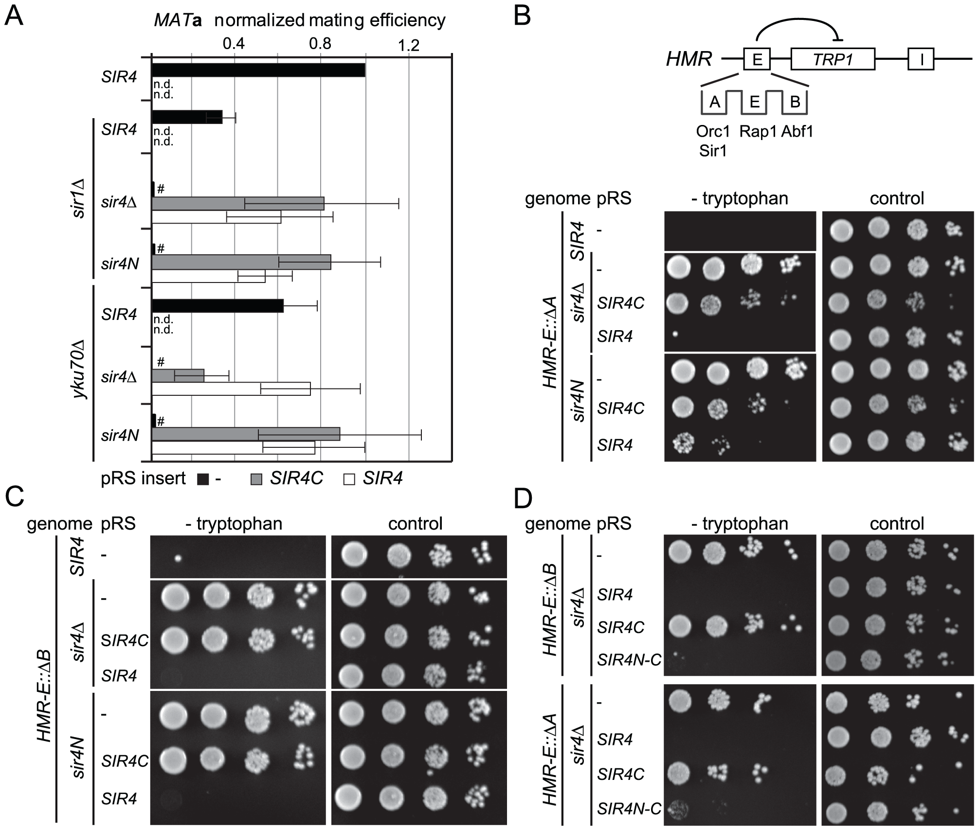Sir4C is not sufficient for silencing at compromised <i>HM</i> loci.