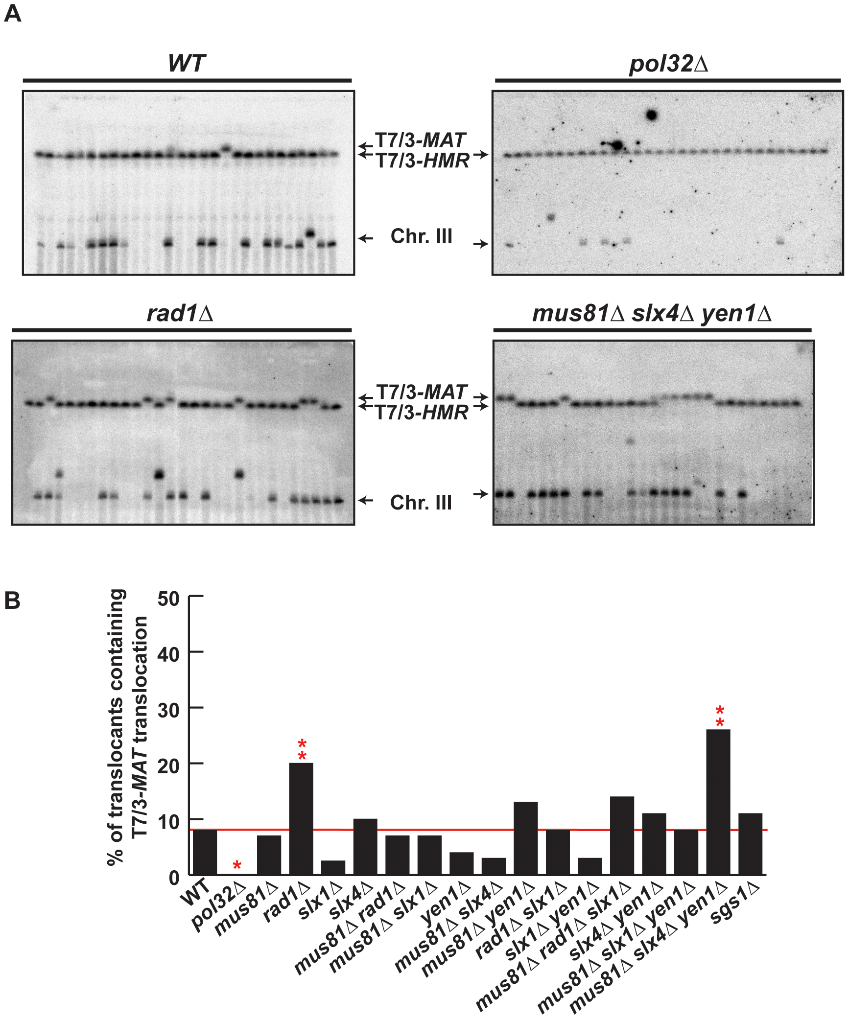 PFGE analysis of T7/3 translocations in SSE mutants.