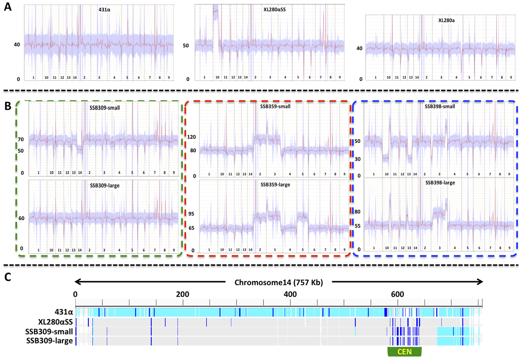 Transient aneuploid and persistent diploid progeny are generated from α-α unisexual reproduction.