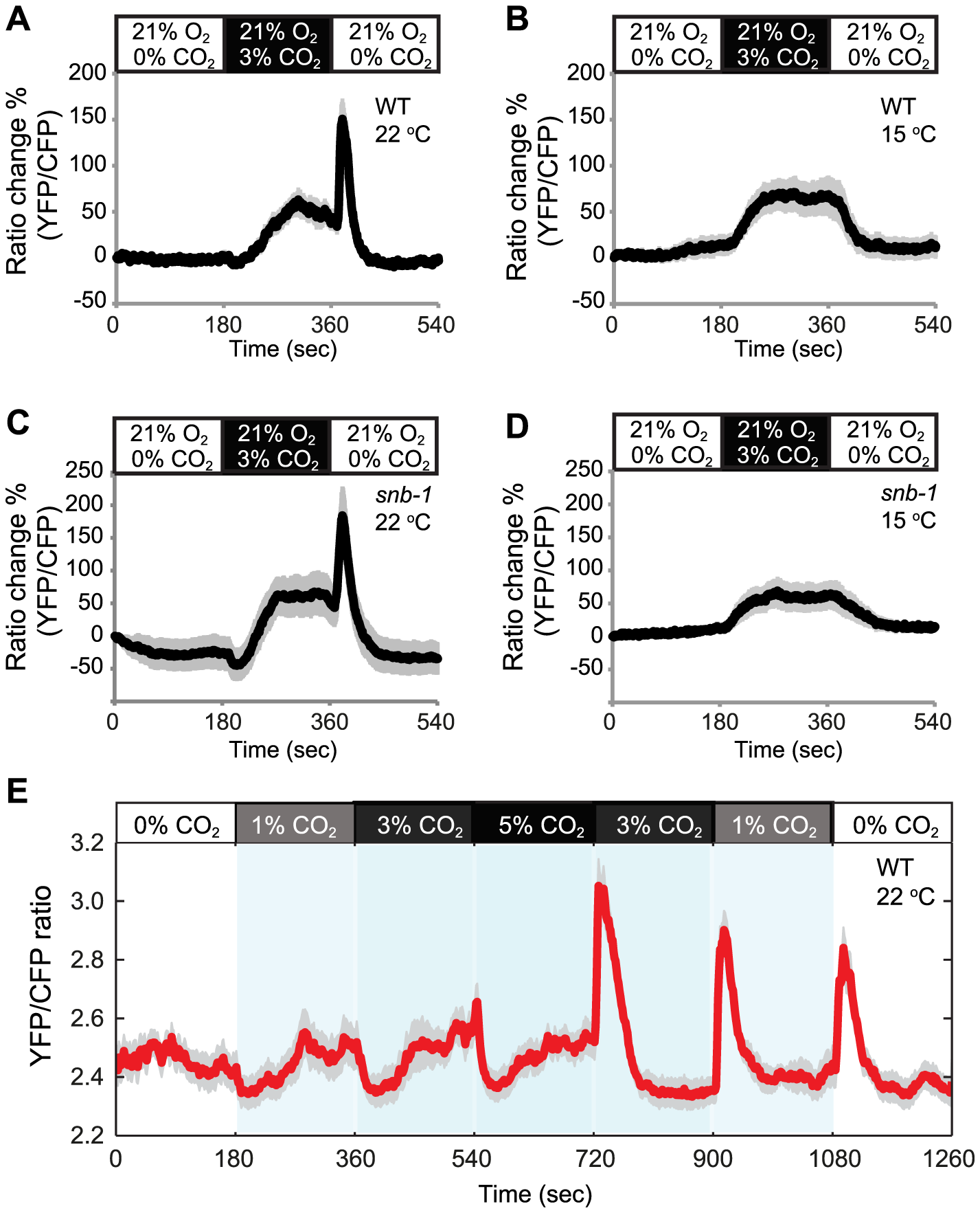 Acclimation temperature alters CO<sub>2</sub>-evoked Ca<sup>2+</sup> responses in AFD neurons.