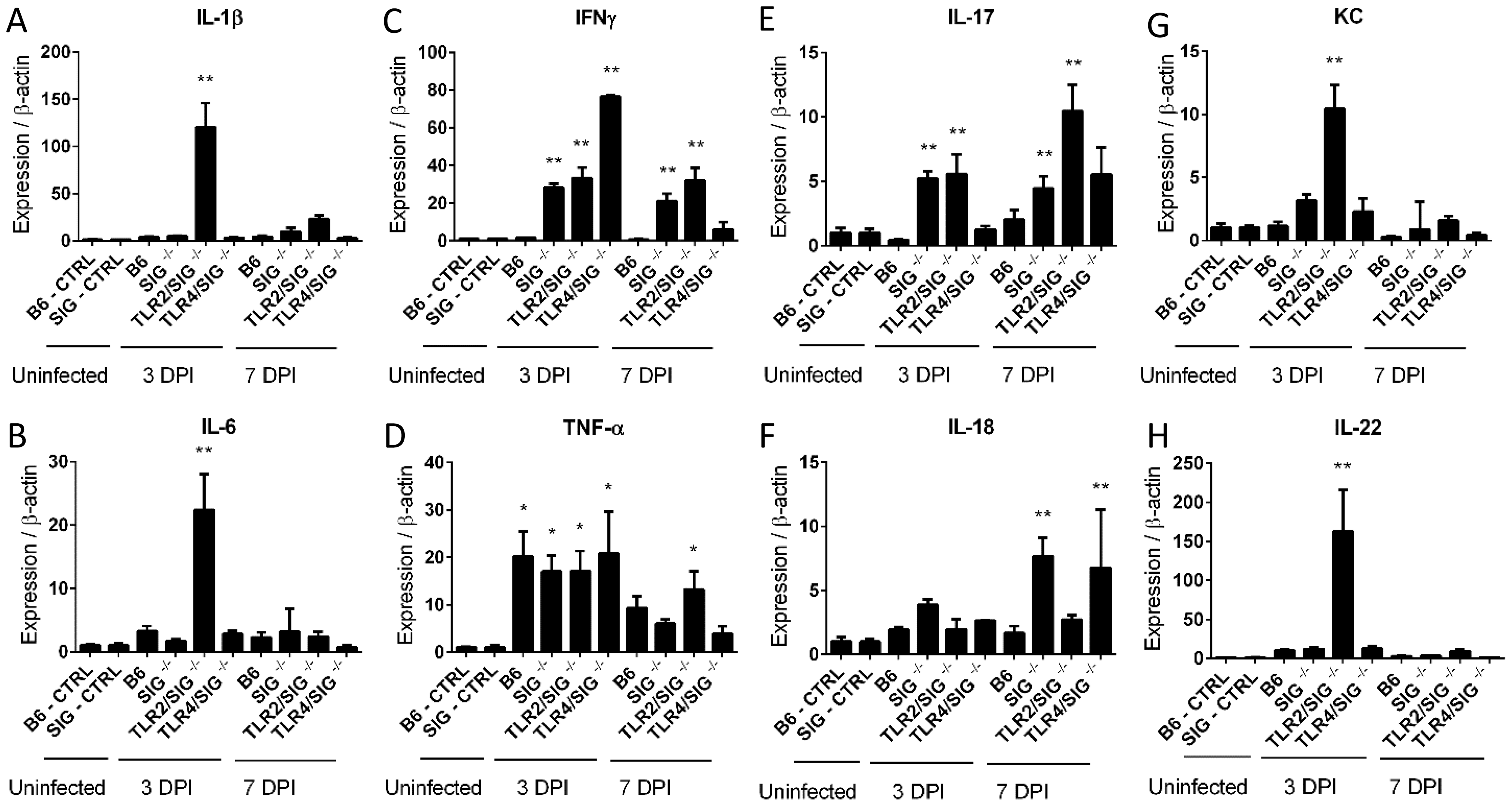 Cytokine production in infected mice.