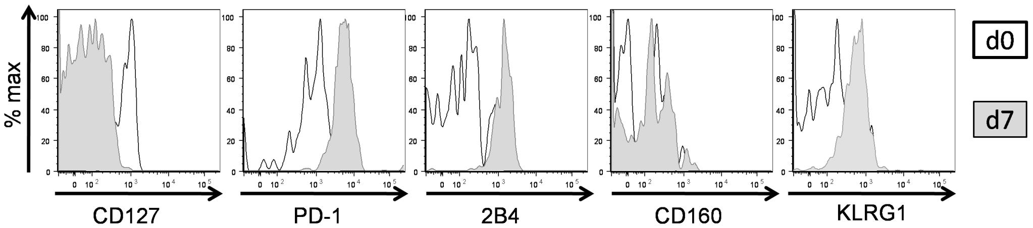Upregulation of inhibitory receptor expression on CD127hi cells upon antigen stimulation.