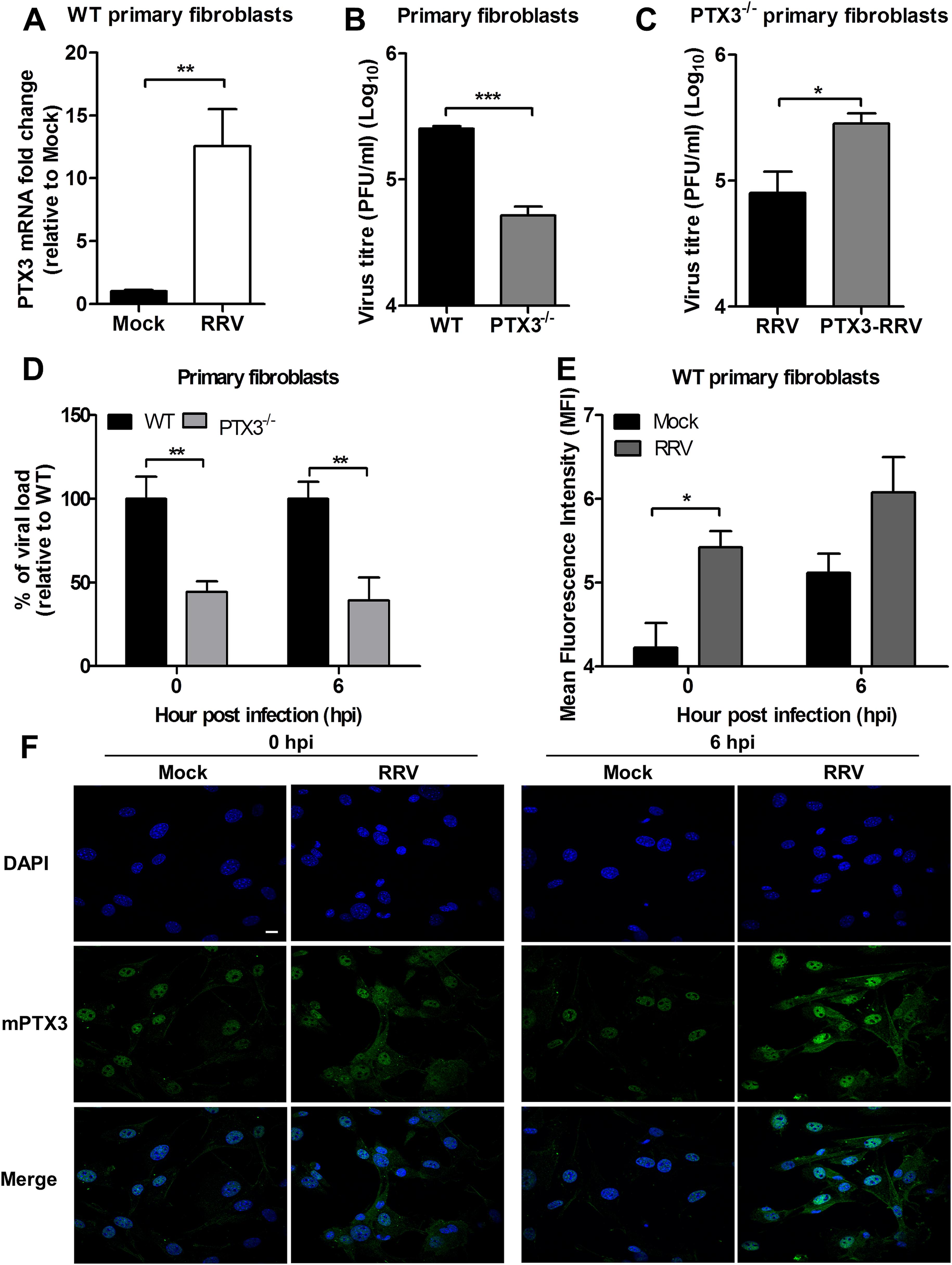 PTX3 enhances RRV replication in murine primary fibroblasts.
