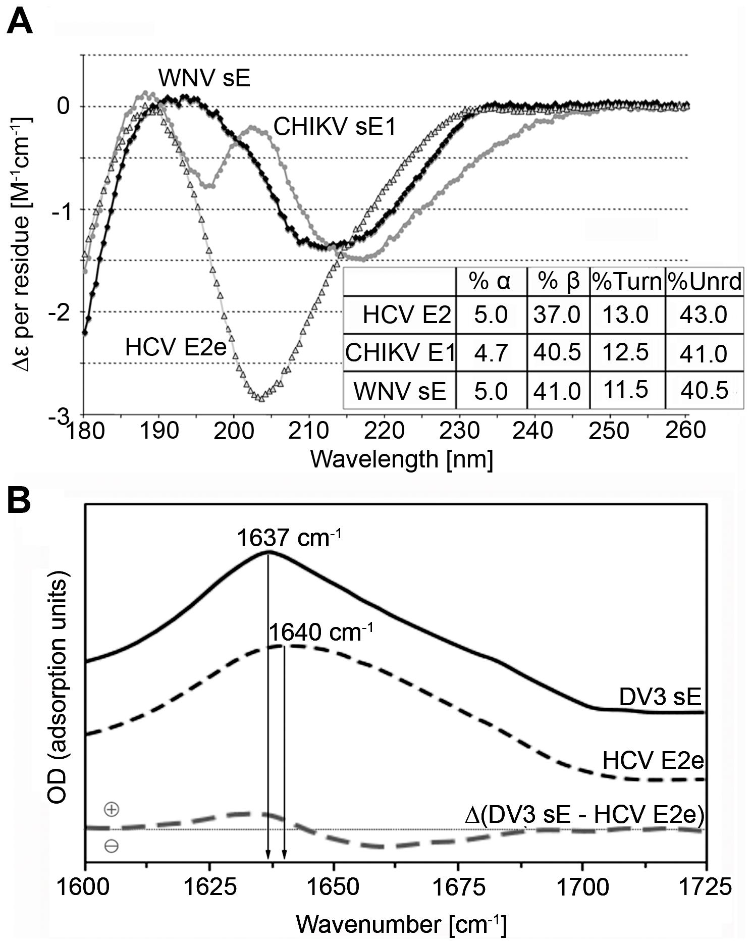 Experimental analysis of the secondary structure of HCV E2e.