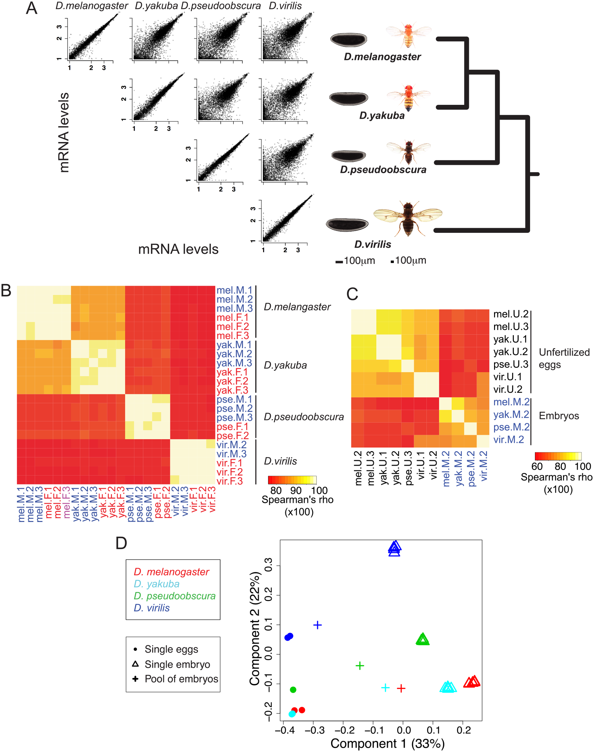 General changes of embryonic gene expression between four <i>Drosophila</i> species.