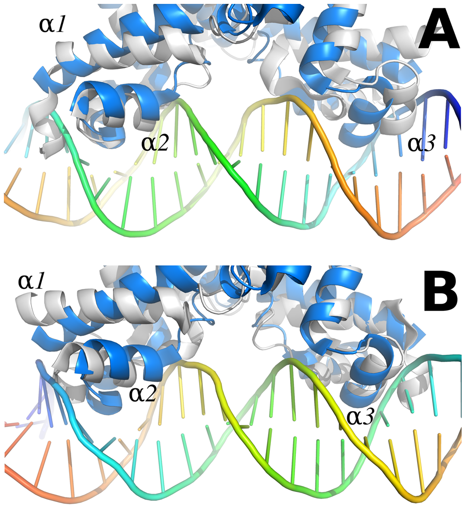 Comparison between the SmeT-Triclosan (in grey) and the QacR-DNA complex (in blue) structures.