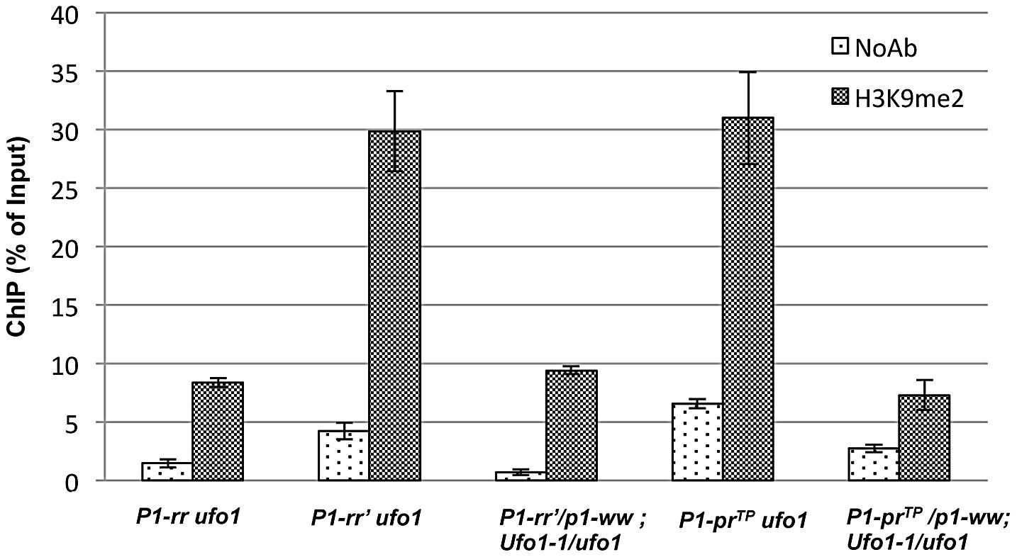 Comparison of H3K9-dimethylation (H3K9me2) levels in <i>P1-rr′</i> and <i>P1-pr<sup>TP</sup></i> in the absence and presence of <i>Ufo1-1</i>.