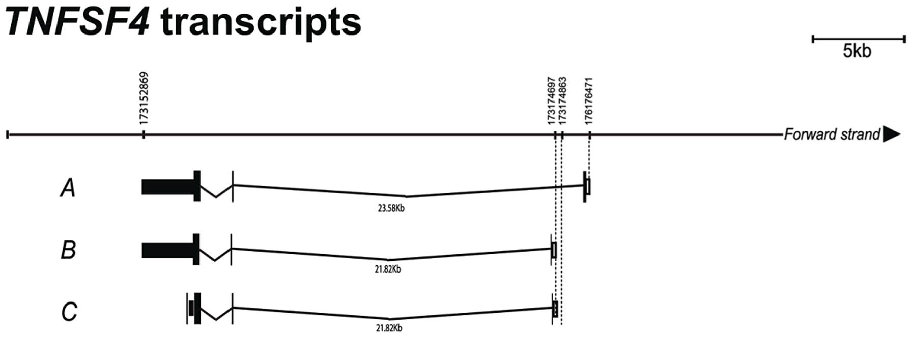 Confirmation of <i>TNFSF4</i> start site and splice variants.