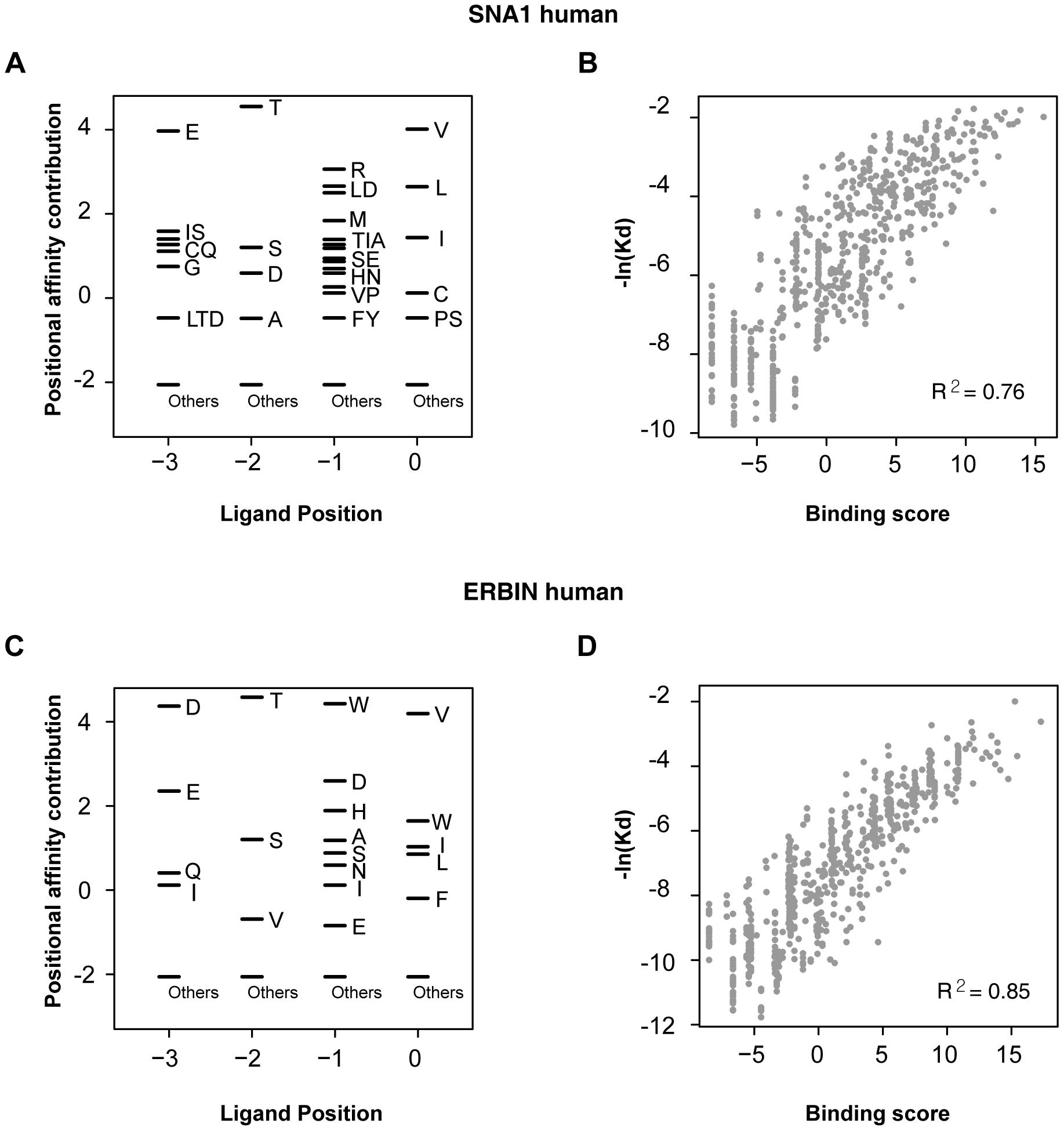 Correlation between binding score and binding affinity.