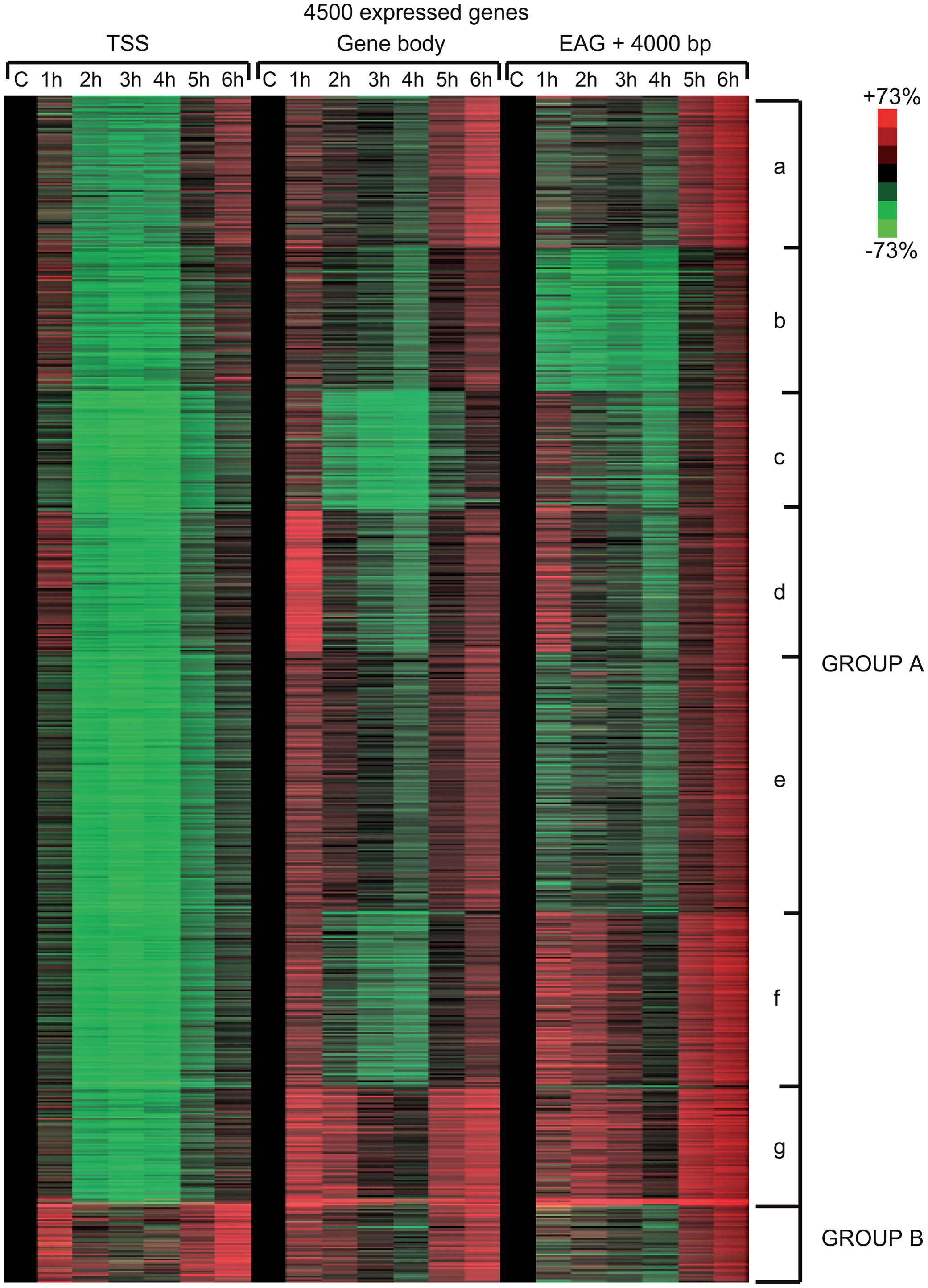 Different Pol II behavior patterns in time after UVB irradiation on 4500 expressed genes.