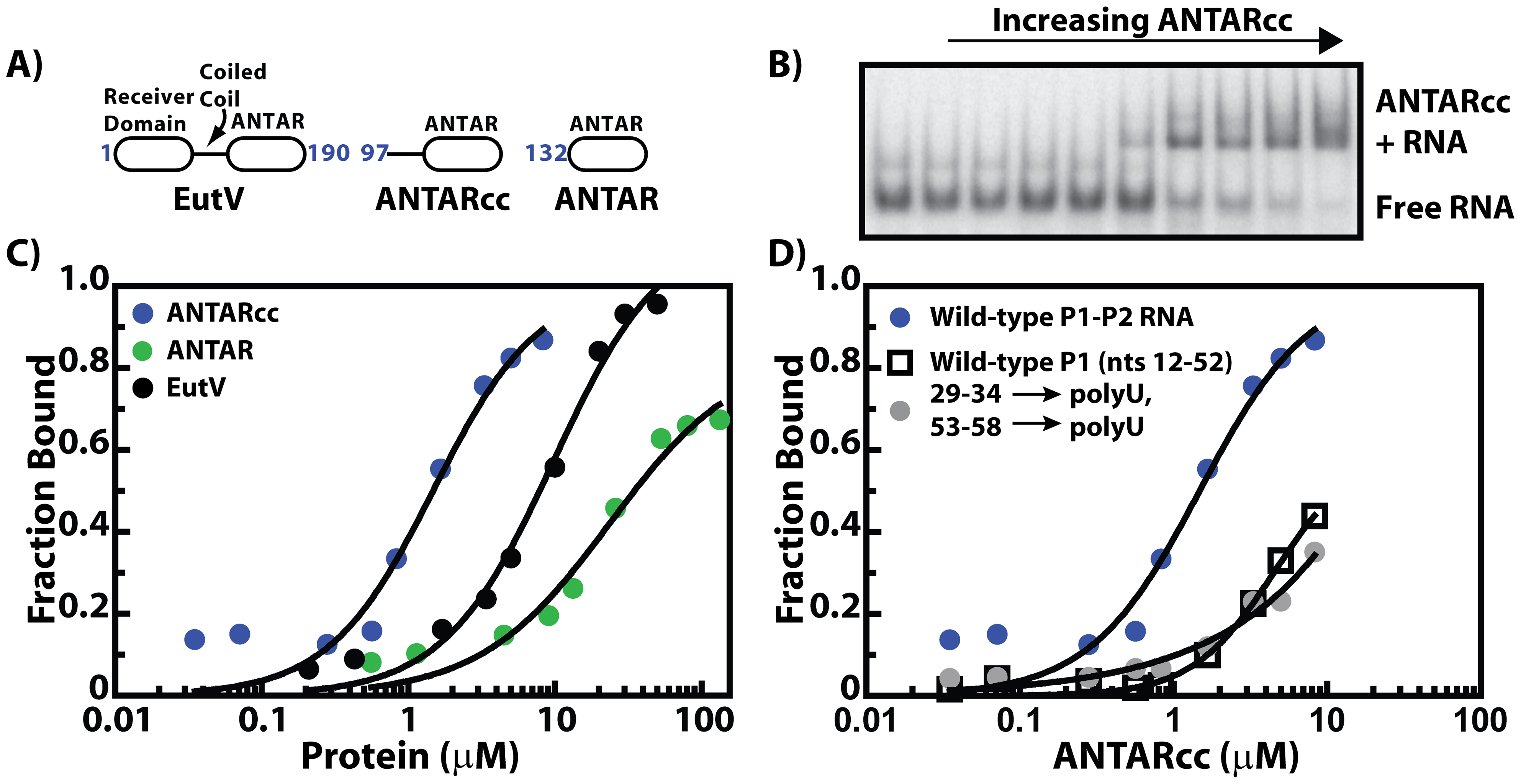 The minimum ANTAR domain for RNA recognition.