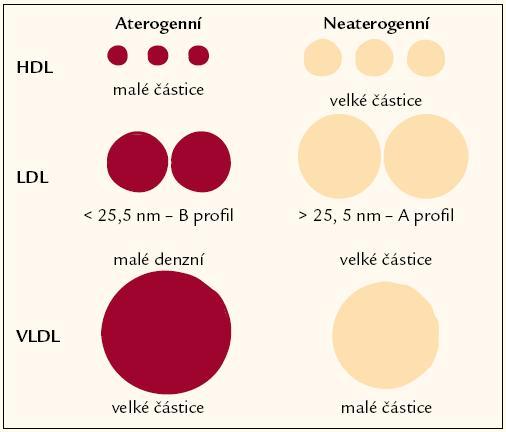 Velikost subpopulací lipoproteidů a aterogenní riziko.