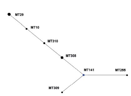 Diagram eBURST, MLVA analýza kmenů <i>B. pertussis,</i> ČR, 1967–1980 Figure 2. eBURST diagram, MLVA analysis of <i>B. pertussis</i> strain collection, Czech Republic, 1967–1980