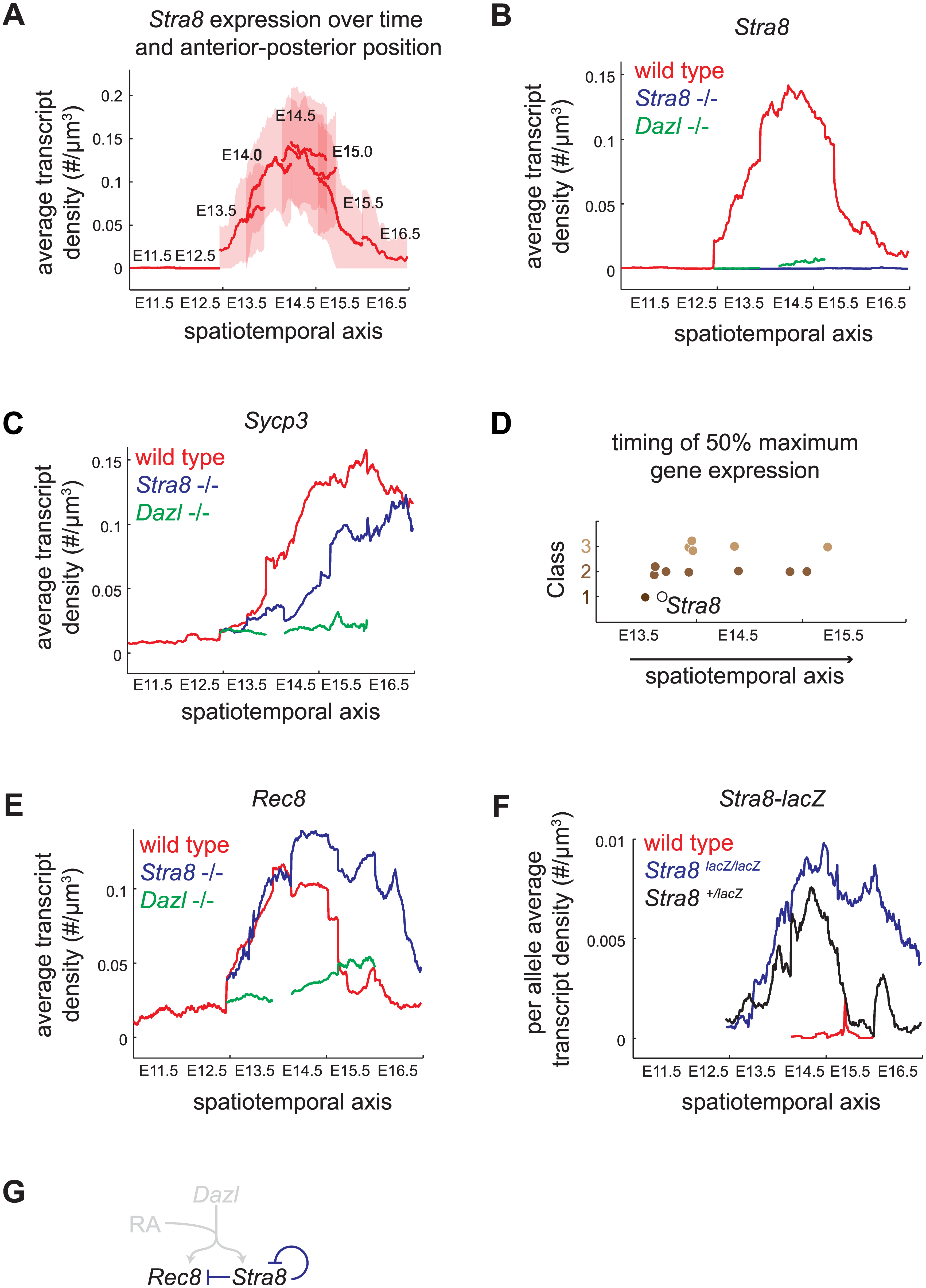 Spatiotemporal analysis demonstrates role of <i>Stra8</i>-independent pathway in inducing maximal and early gene expression, and identifies <i>Stra8</i>-dependent down-regulation of <i>Stra8</i> and <i>Rec8</i>.