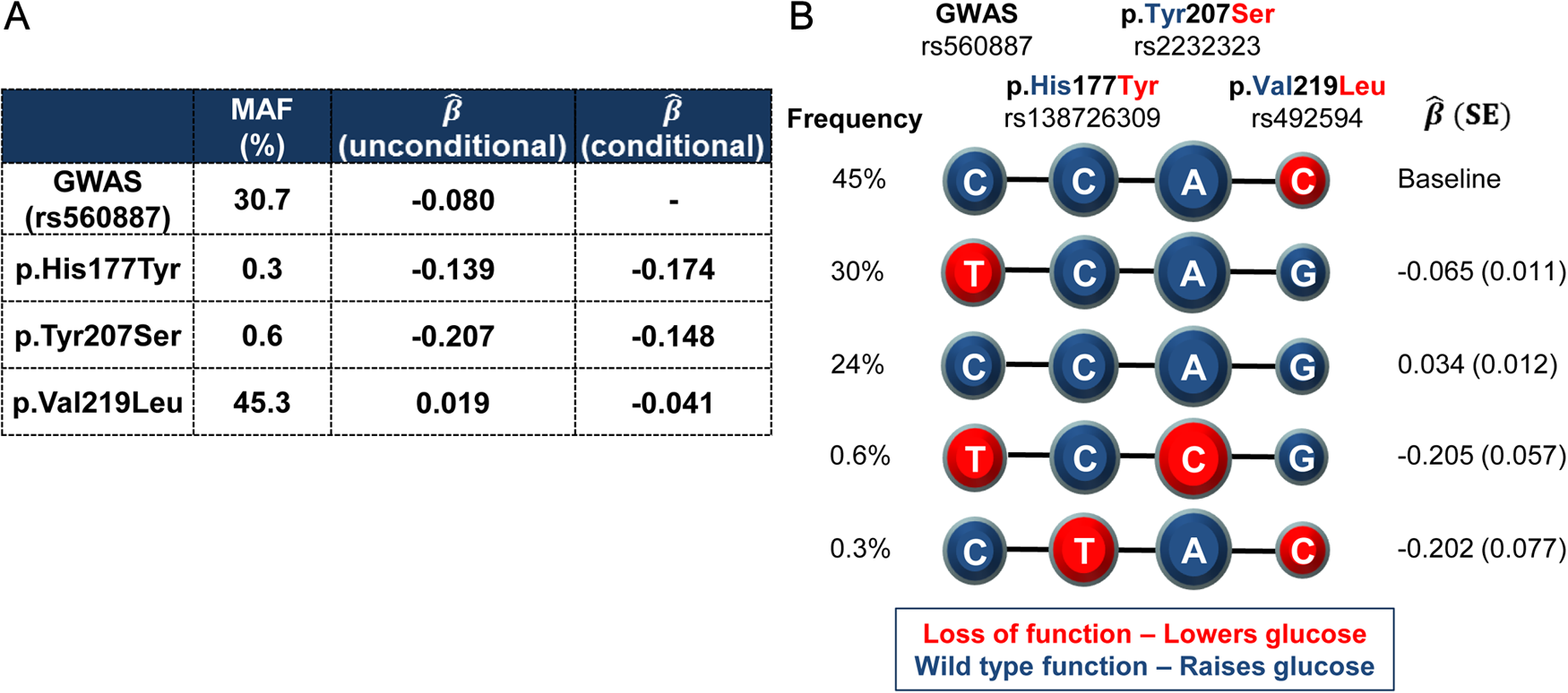 Haplotypes of the lead non-coding GWAS SNP rs560887 and the three coding variants.