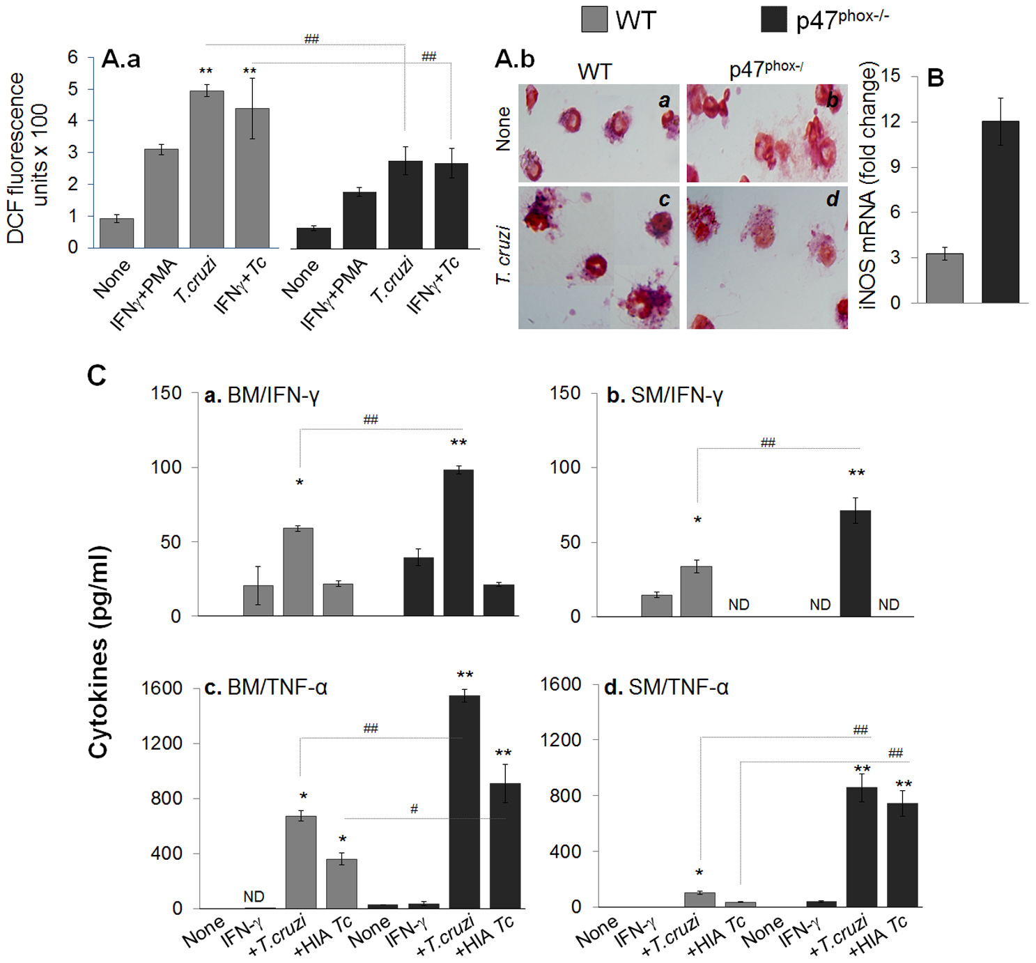 <i>In vitro</i> functional activation of p47<sup>phox−/−</sup> macrophages in response to <i>T. cruzi</i> infection.