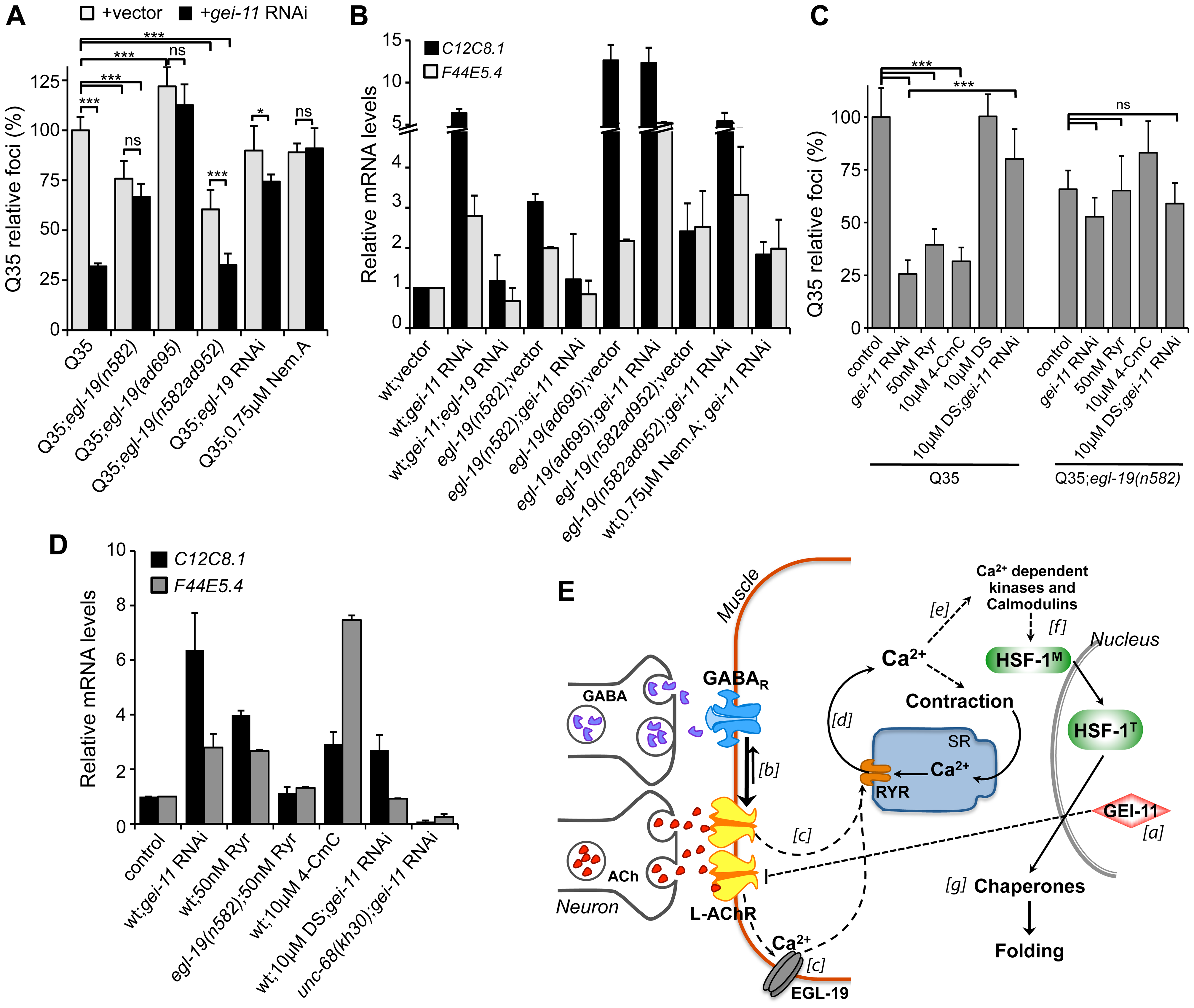 EGL-19- and RYR-mediated Ca<sup>2+</sup> influx are components of the proteostasis rescue mechanism.